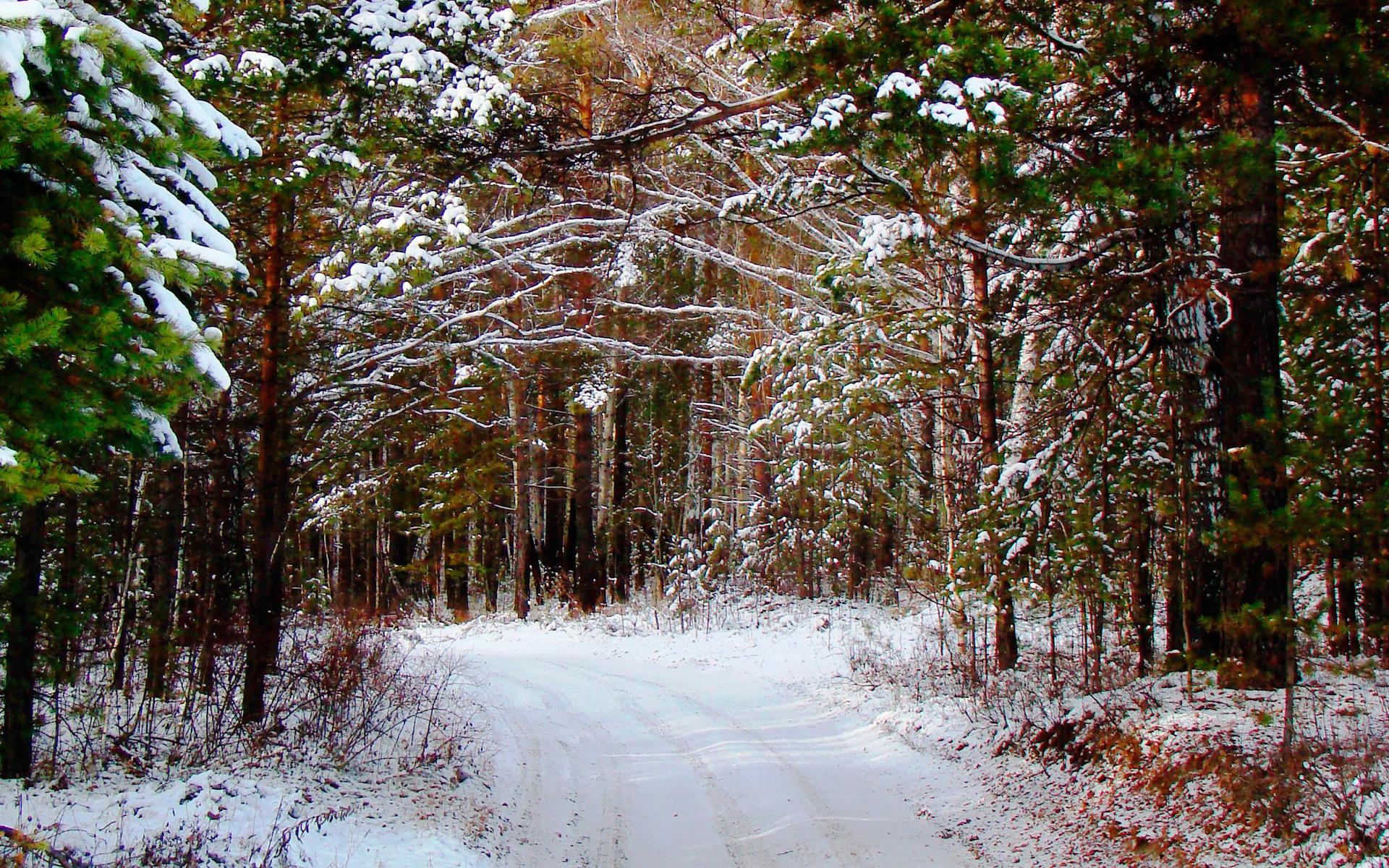 21971 скачать обои Пейзаж, Зима, Деревья, Дороги, Снег - заставки и картинки бесплатно