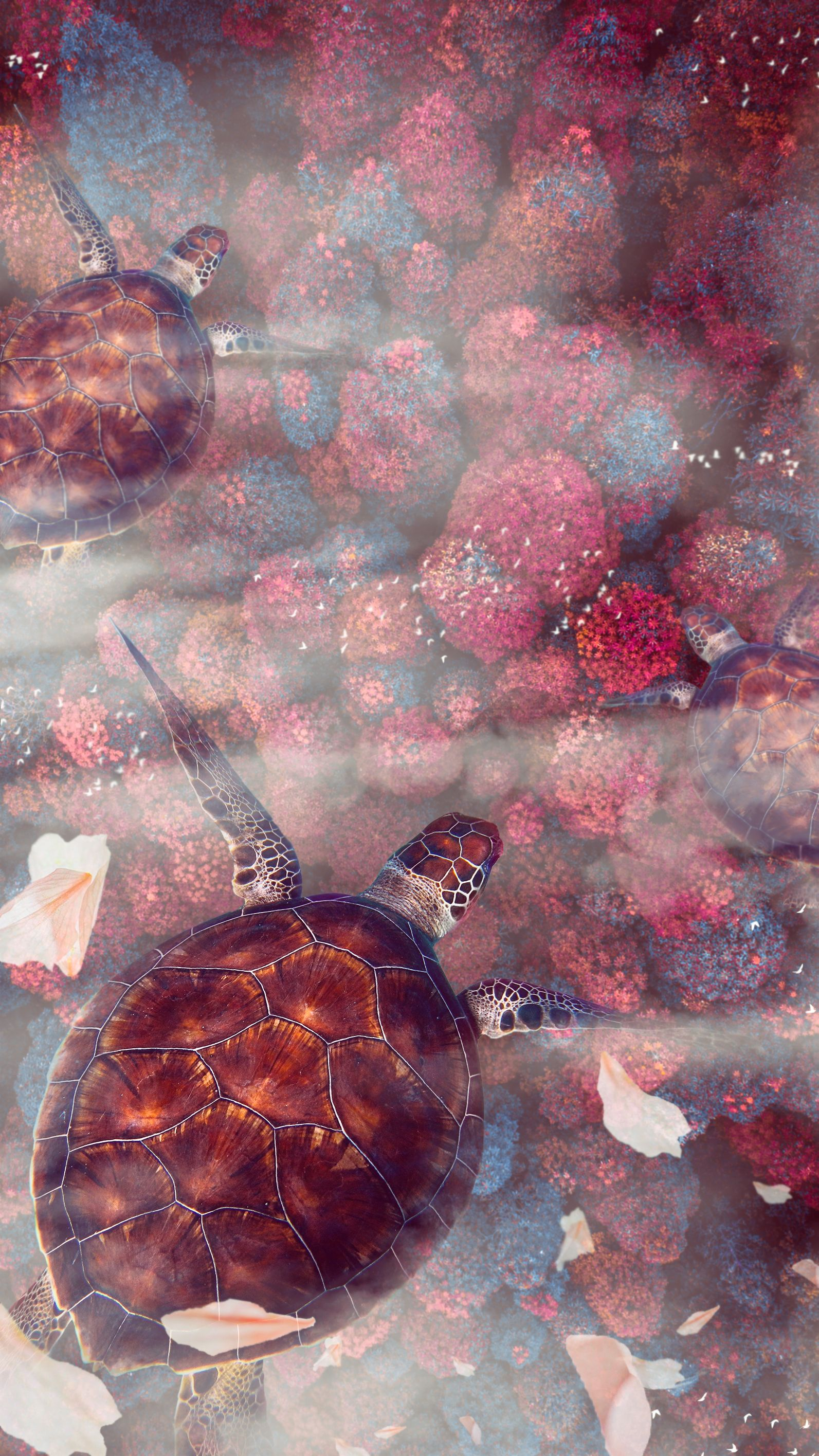 151119 download wallpaper Animals, Turtles, Wildlife, Underwater World, Turtle, Sea Turtle, Sea Turtles screensavers and pictures for free
