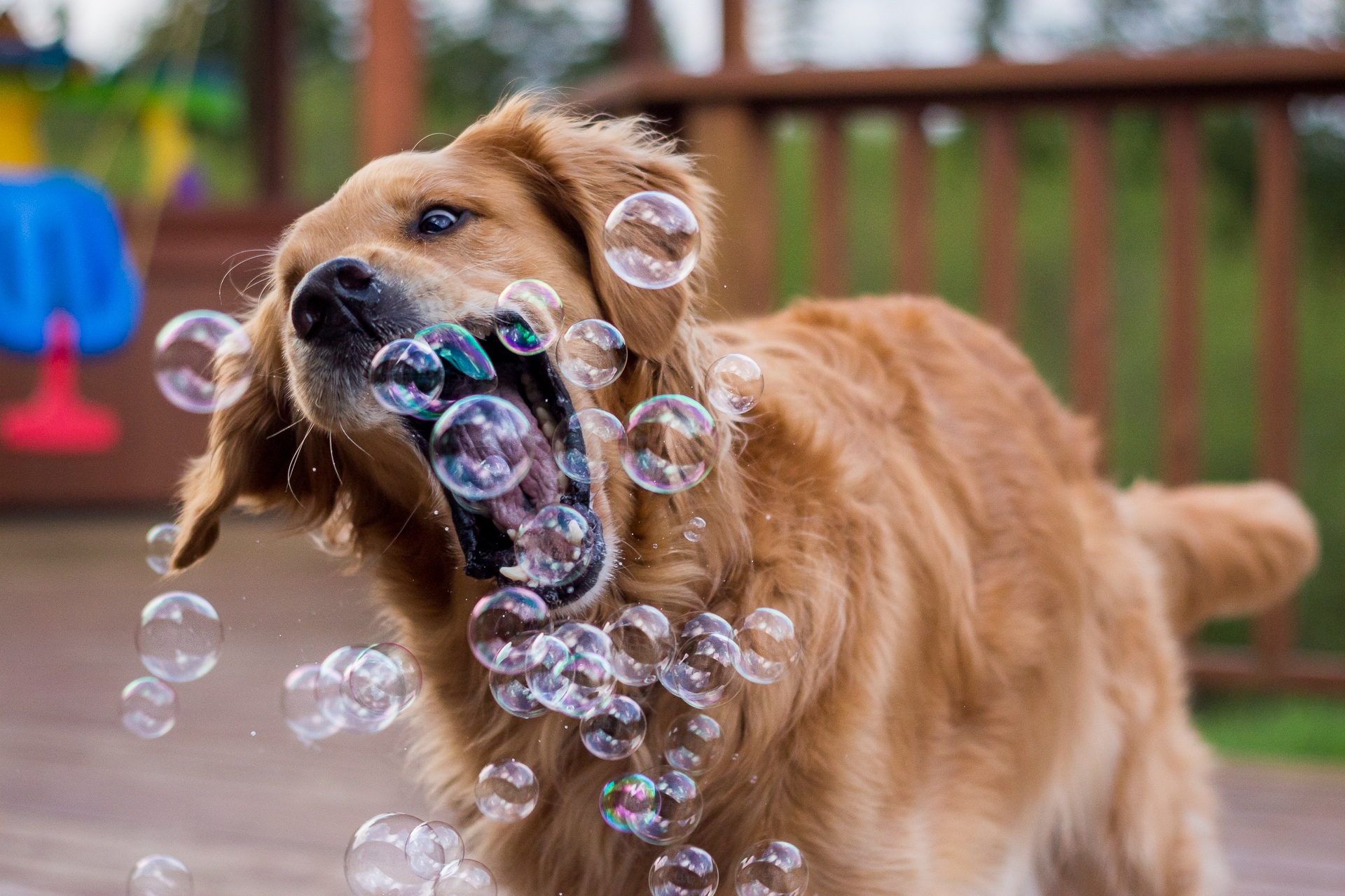 85511 download wallpaper Animals, Dog, Bubble, Bubbles, Playful screensavers and pictures for free