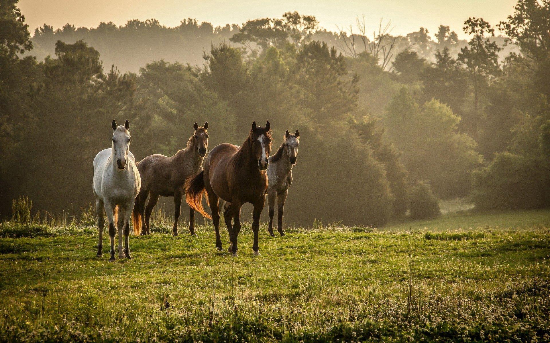 117981 скачать обои Животные, Лошади, Трава, Стадо, Прогулка, Деревья, Туман - заставки и картинки бесплатно