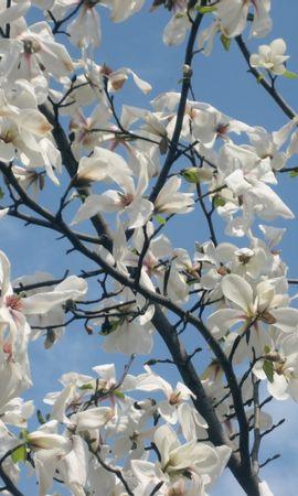 1900 descargar fondo de pantalla Plantas, Flores: protectores de pantalla e imágenes gratis