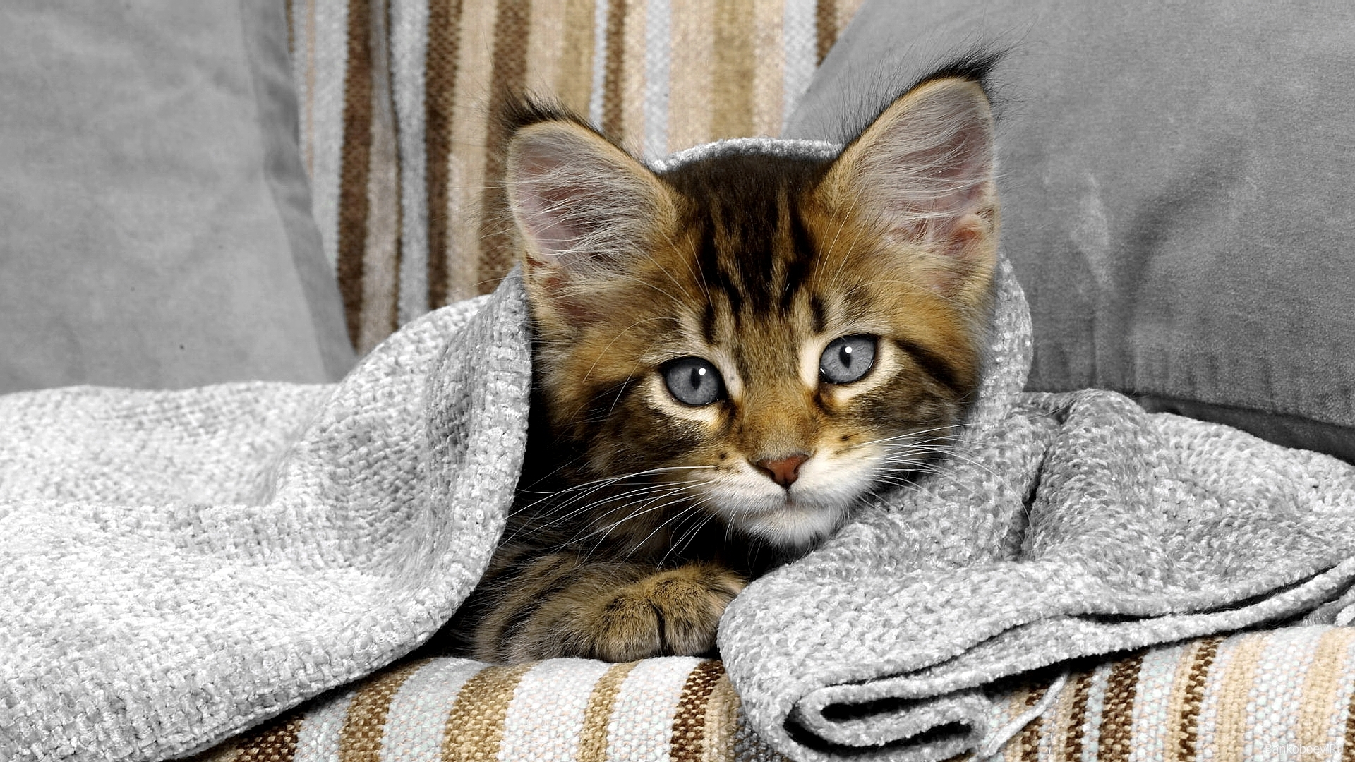 48908 Screensavers and Wallpapers Cats for phone. Download Animals, Cats pictures for free