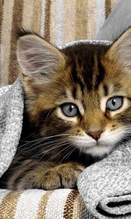 48908 скачать обои Животные, Кошки (Коты, Котики) - заставки и картинки бесплатно