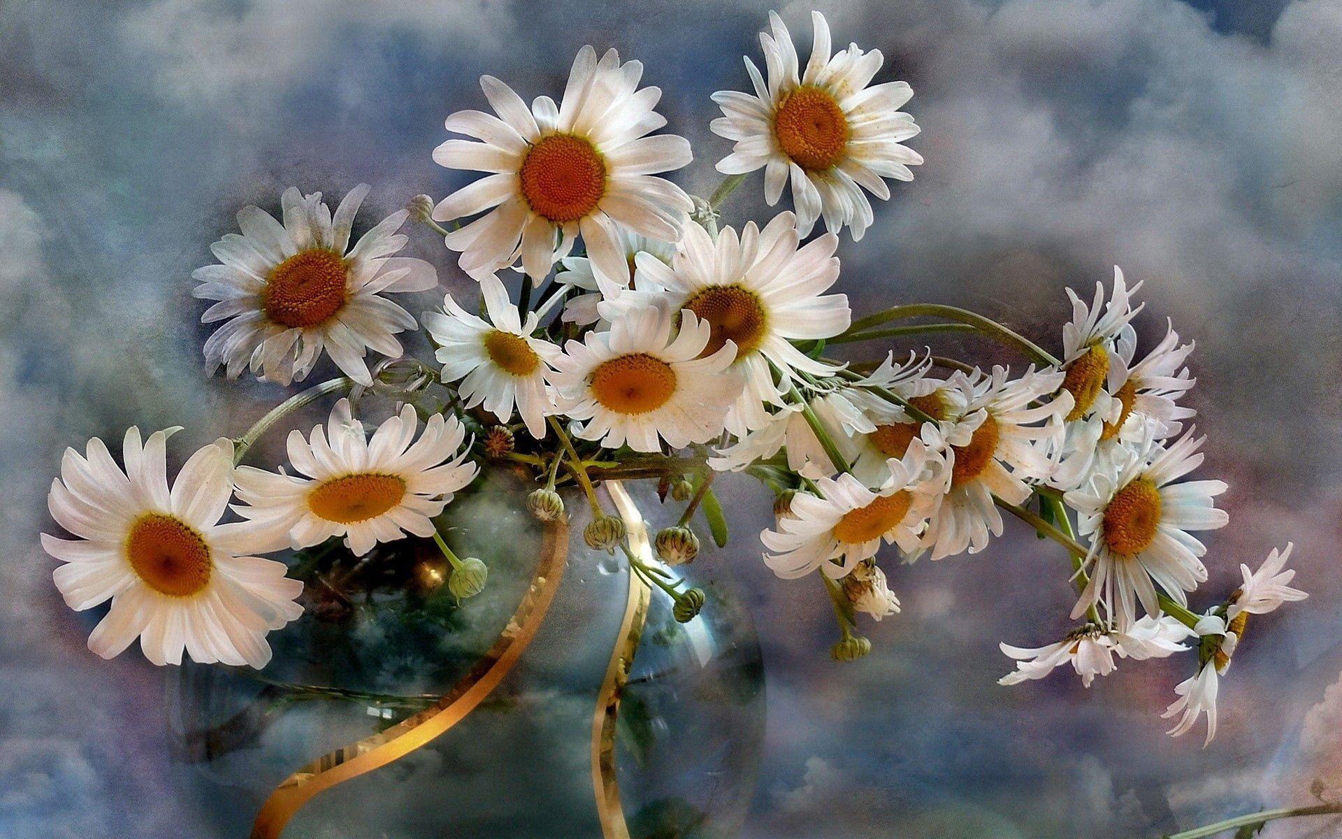 156270 Заставки и Обои Ромашки на телефон. Скачать Цветы, Ромашки, Букет, Ваза, Небо, Облака, Фон картинки бесплатно