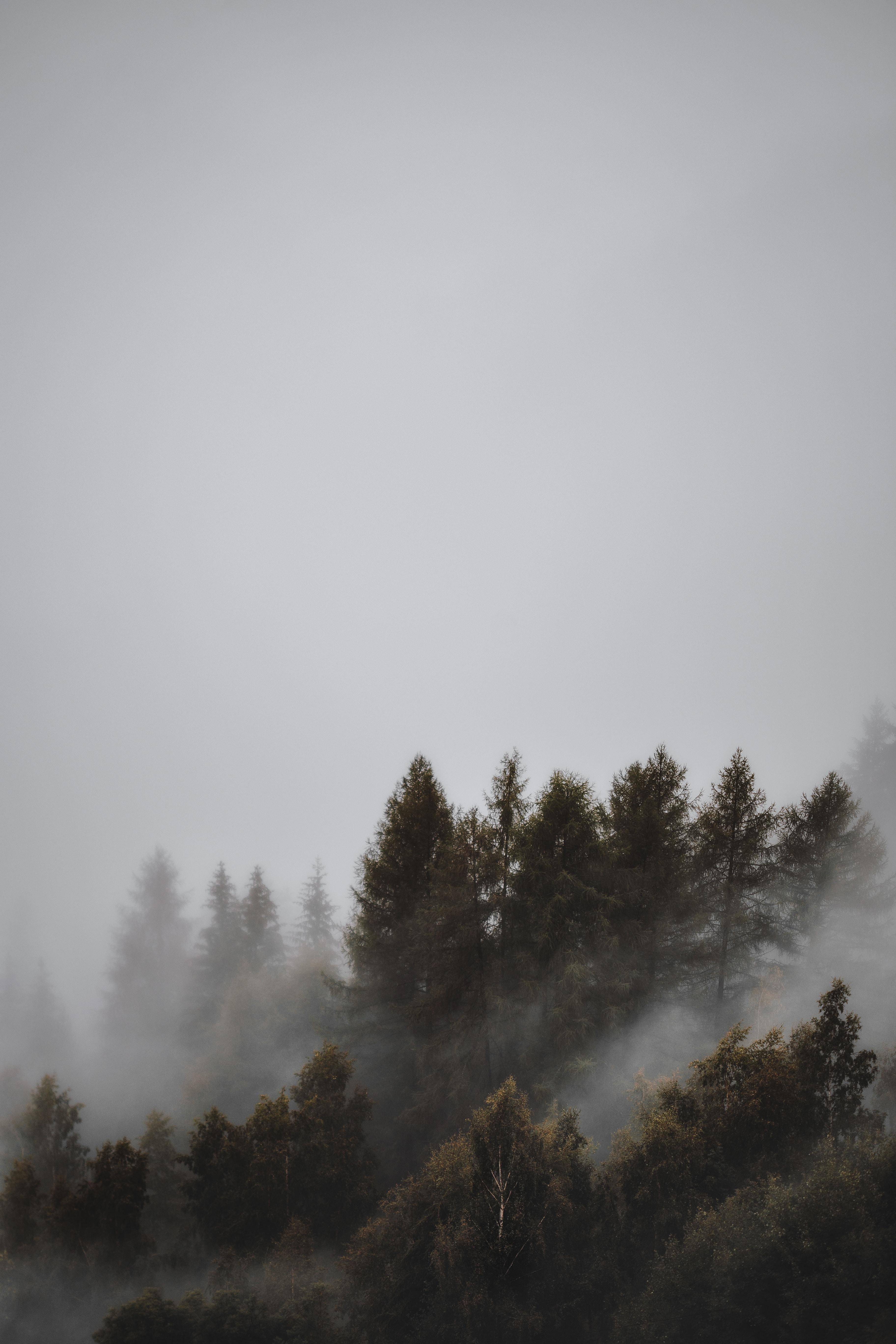119757 Hintergrundbild herunterladen Landschaft, Natur, Bäume, Wald, Nebel, Düster, Düsteren - Bildschirmschoner und Bilder kostenlos