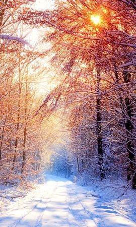 10243 скачать обои Пейзаж, Зима, Деревья, Дороги, Солнце - заставки и картинки бесплатно