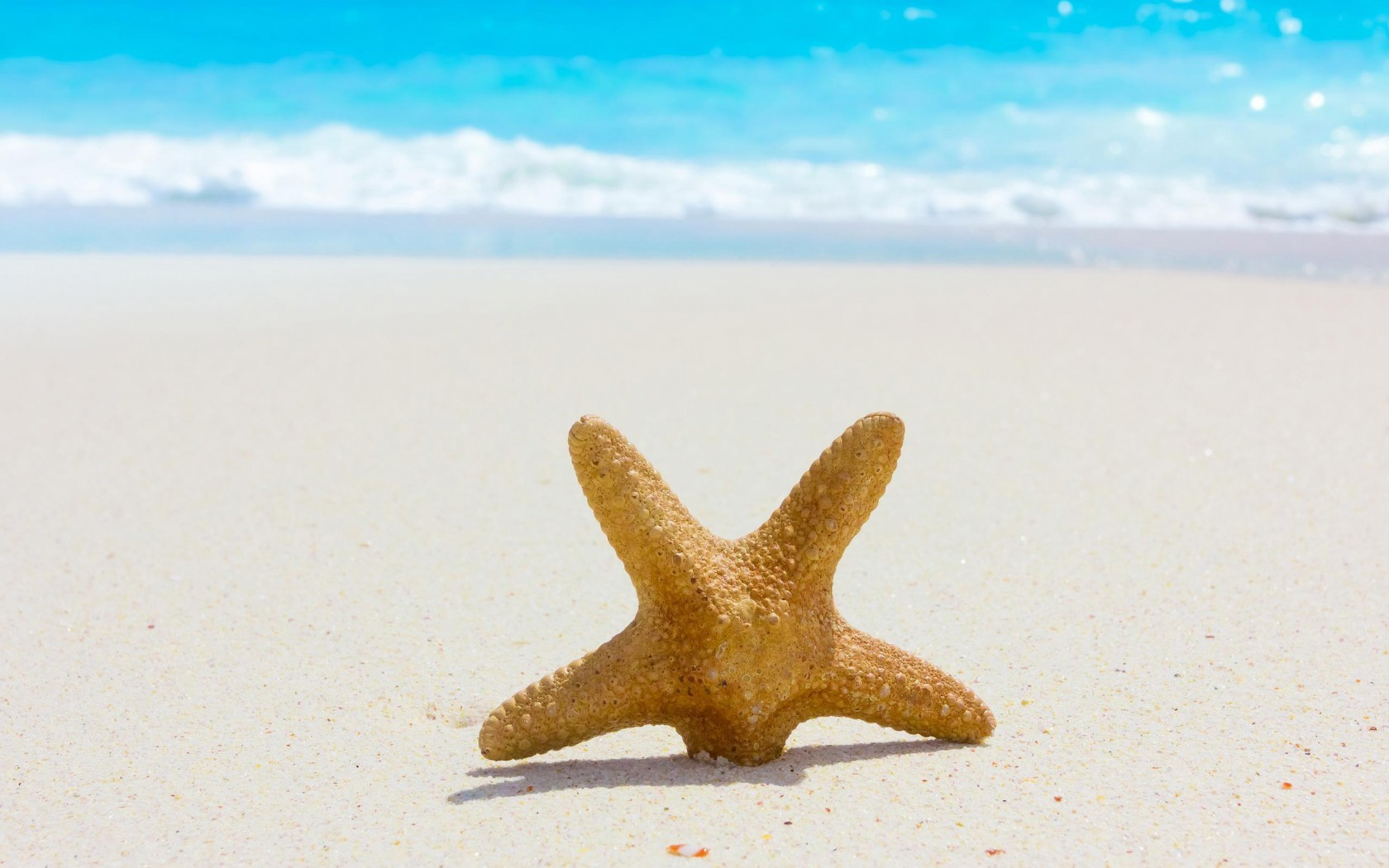 21497 download wallpaper Landscape, Sea, Beach, Sand, Starfish screensavers and pictures for free