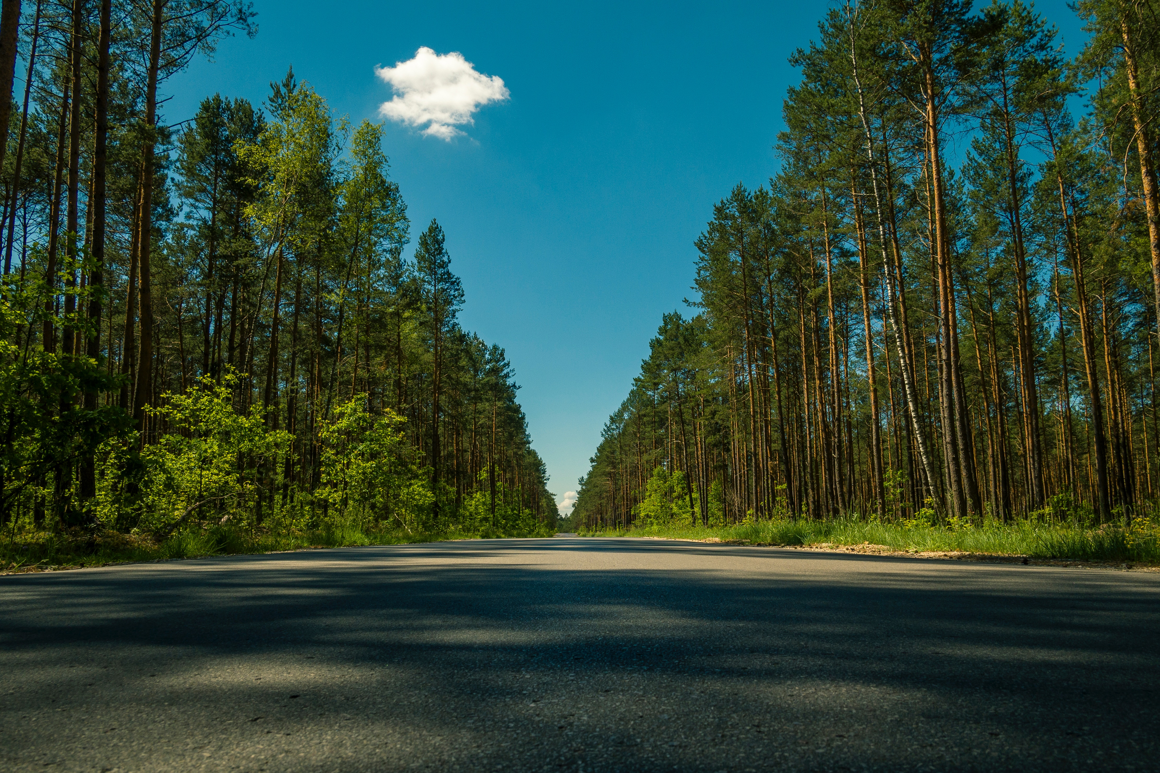 143376 Screensavers and Wallpapers Summer for phone. Download Nature, Trees, Summer, Road pictures for free