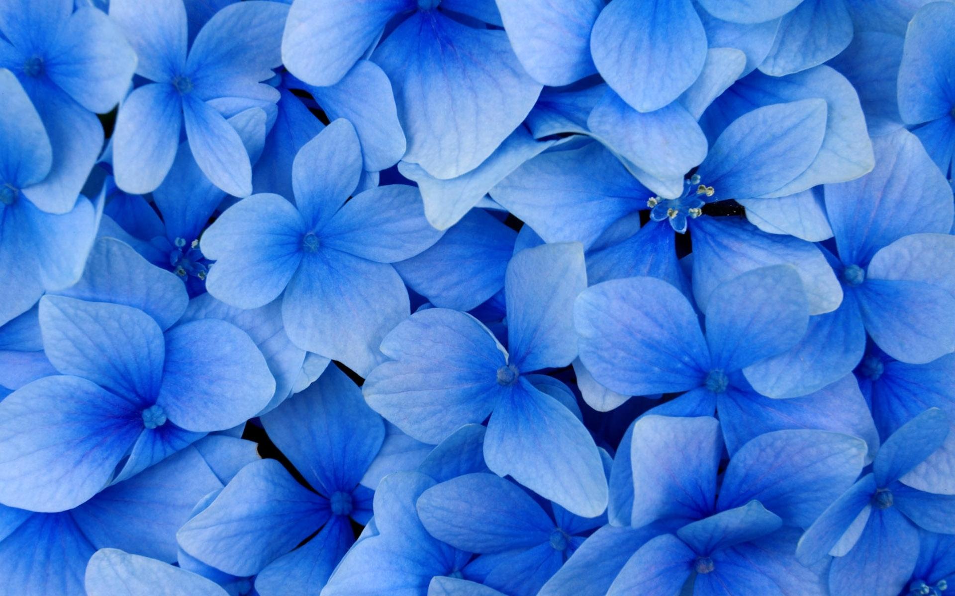 7852 Заставки и Обои Фиалки на телефон. Скачать Растения, Цветы, Фон, Фиалки картинки бесплатно