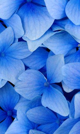 7852 скачать обои Растения, Цветы, Фон, Фиалки - заставки и картинки бесплатно