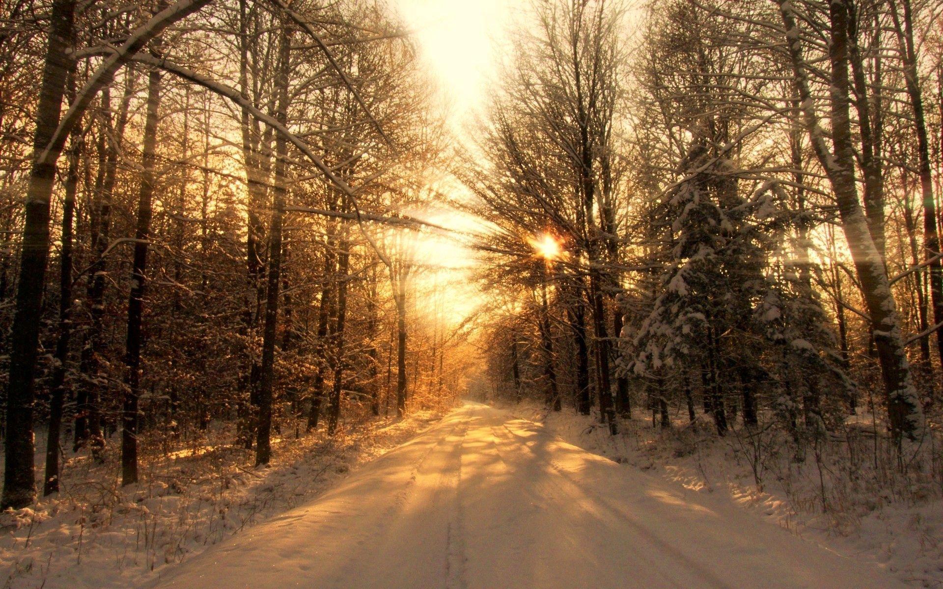 150565壁紙のダウンロード自然, 道路, 道, 森林, 森, 冬, 雪, 木, 日光, ビーム, 光線, 影-スクリーンセーバーと写真を無料で