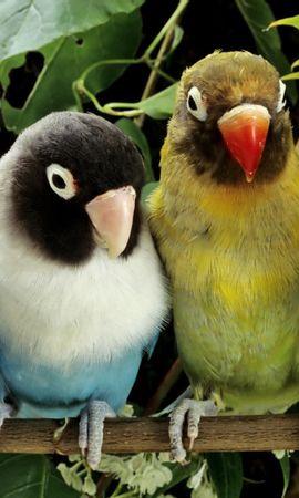 50202 baixar papel de parede Animais, Aves, Papagaios - protetores de tela e imagens gratuitamente