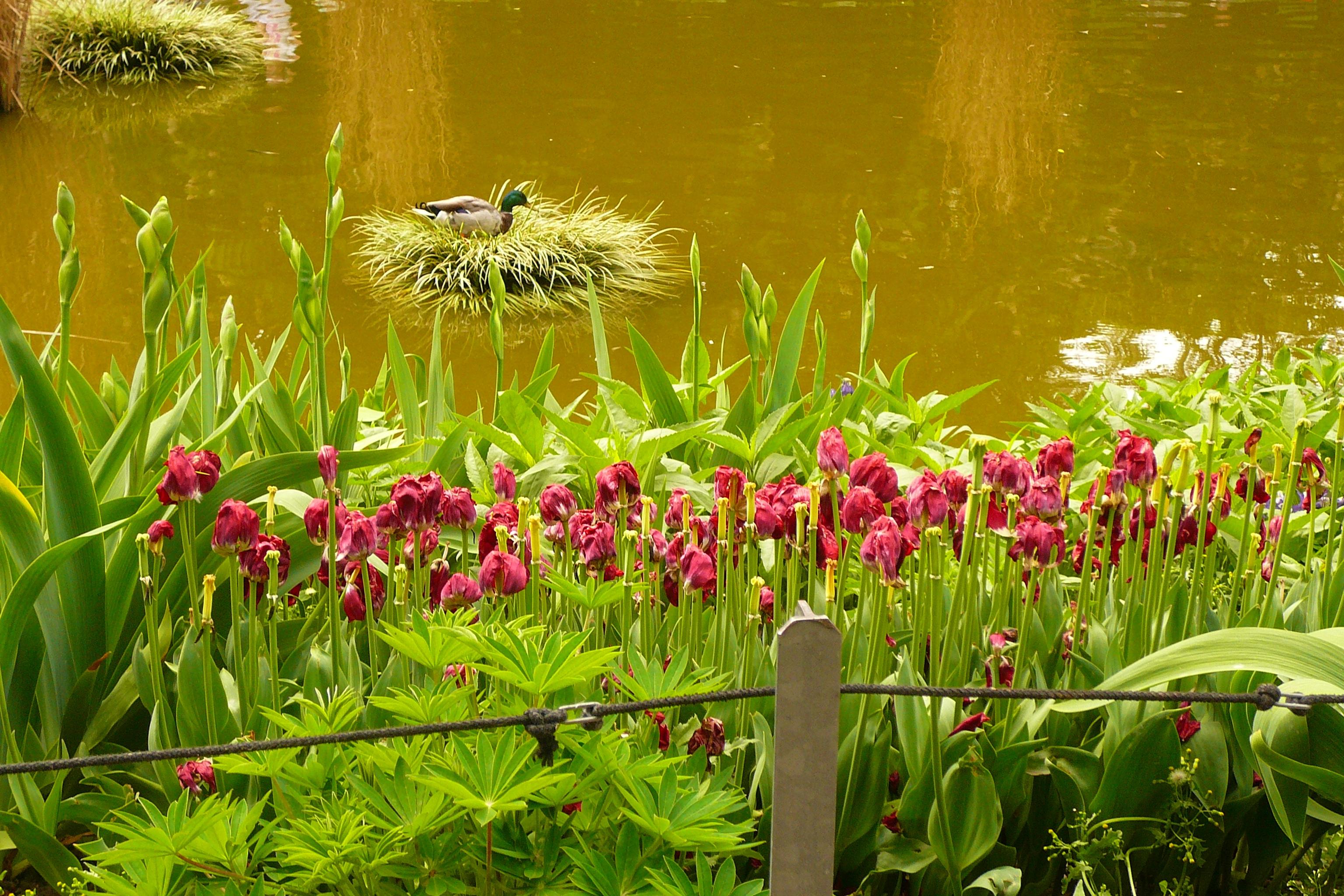 92217 Salvapantallas y fondos de pantalla Flores en tu teléfono. Descarga imágenes de Agua, Cuenca, Naturaleza, Flores gratis