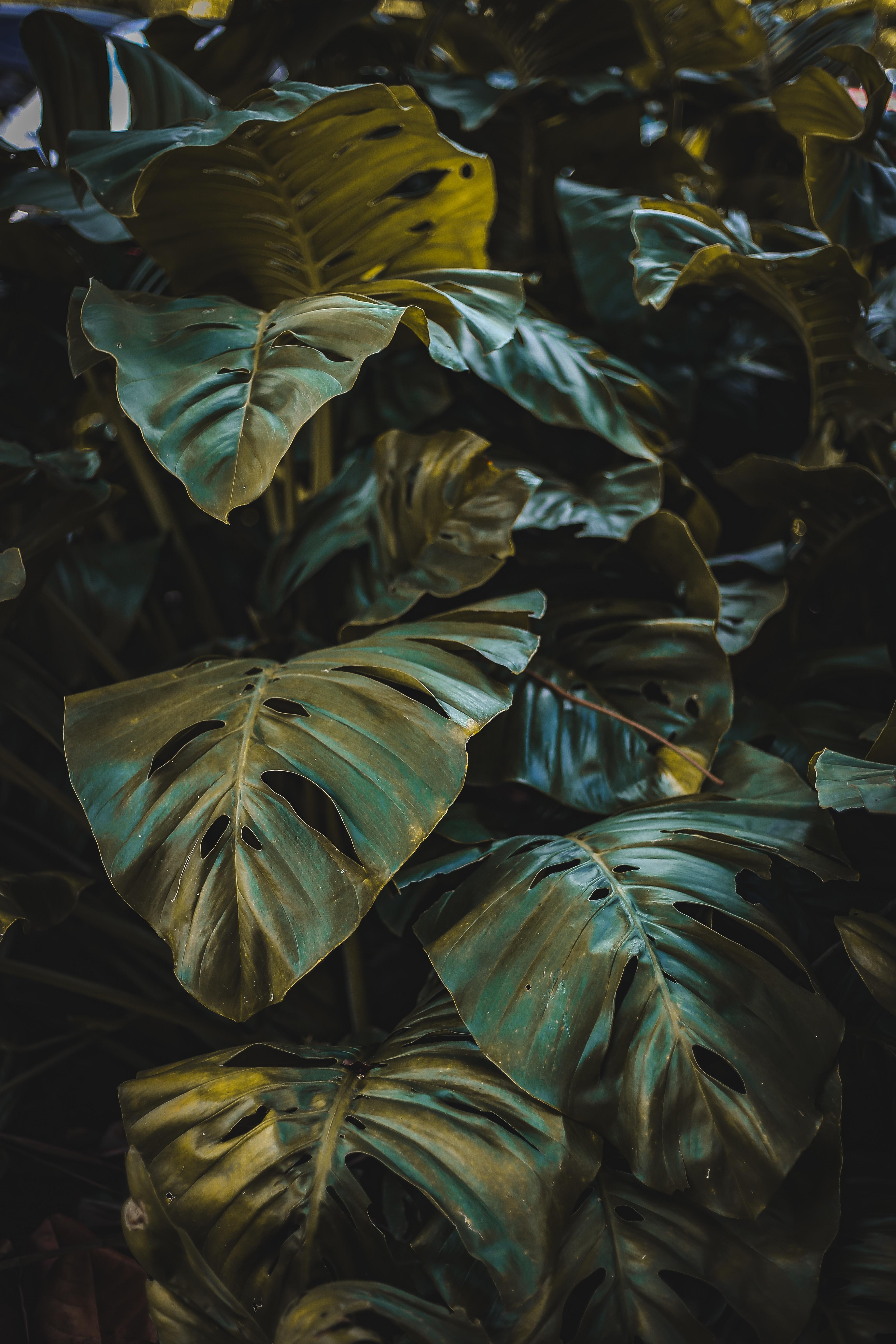 111696 скачать обои Листья, Природа, Растение, Лес, Растительность - заставки и картинки бесплатно