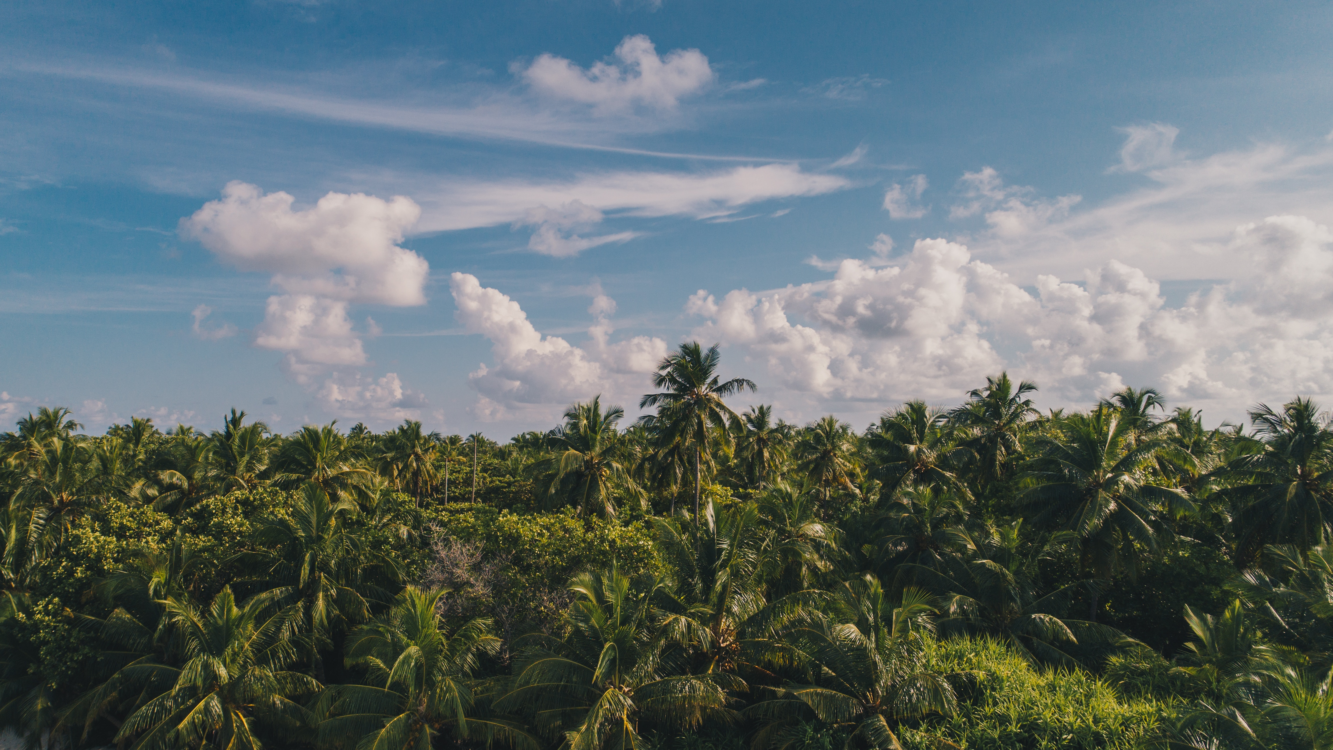 116954 download wallpaper Nature, Clouds, Sky, Tropics, Palms screensavers and pictures for free