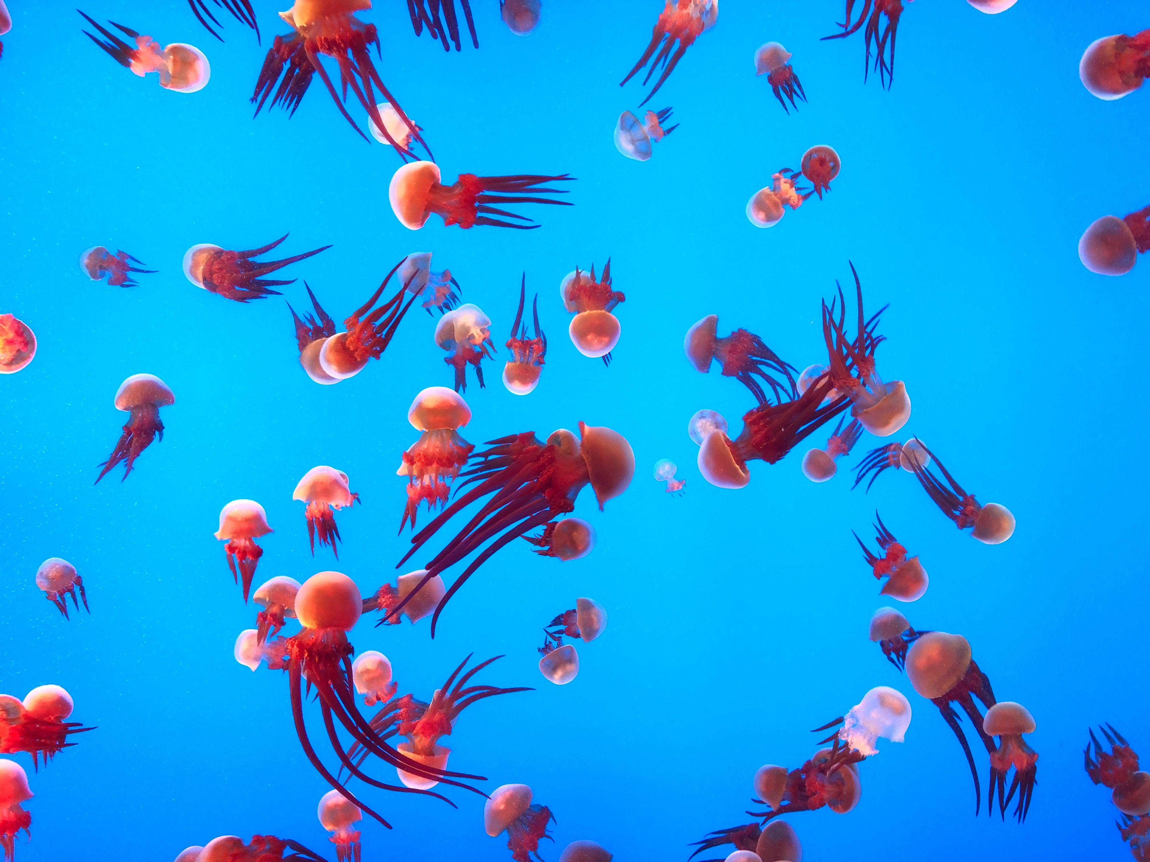 132252 Screensavers and Wallpapers Aquarium for phone. Download Animals, Jellyfish, Swimming, Ocean, Underwater World, Aquarium pictures for free