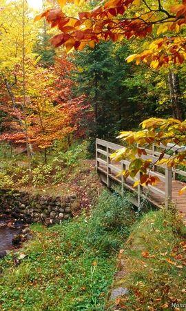 1692 скачать обои Растения, Пейзаж, Река, Мосты, Деревья, Осень - заставки и картинки бесплатно