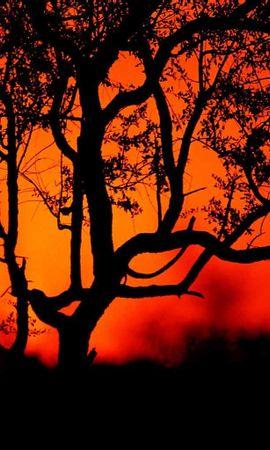 5442 скачать обои Пейзаж, Деревья, Закат, Солнце - заставки и картинки бесплатно