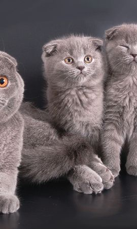 37370 download wallpaper Animals, Cats screensavers and pictures for free