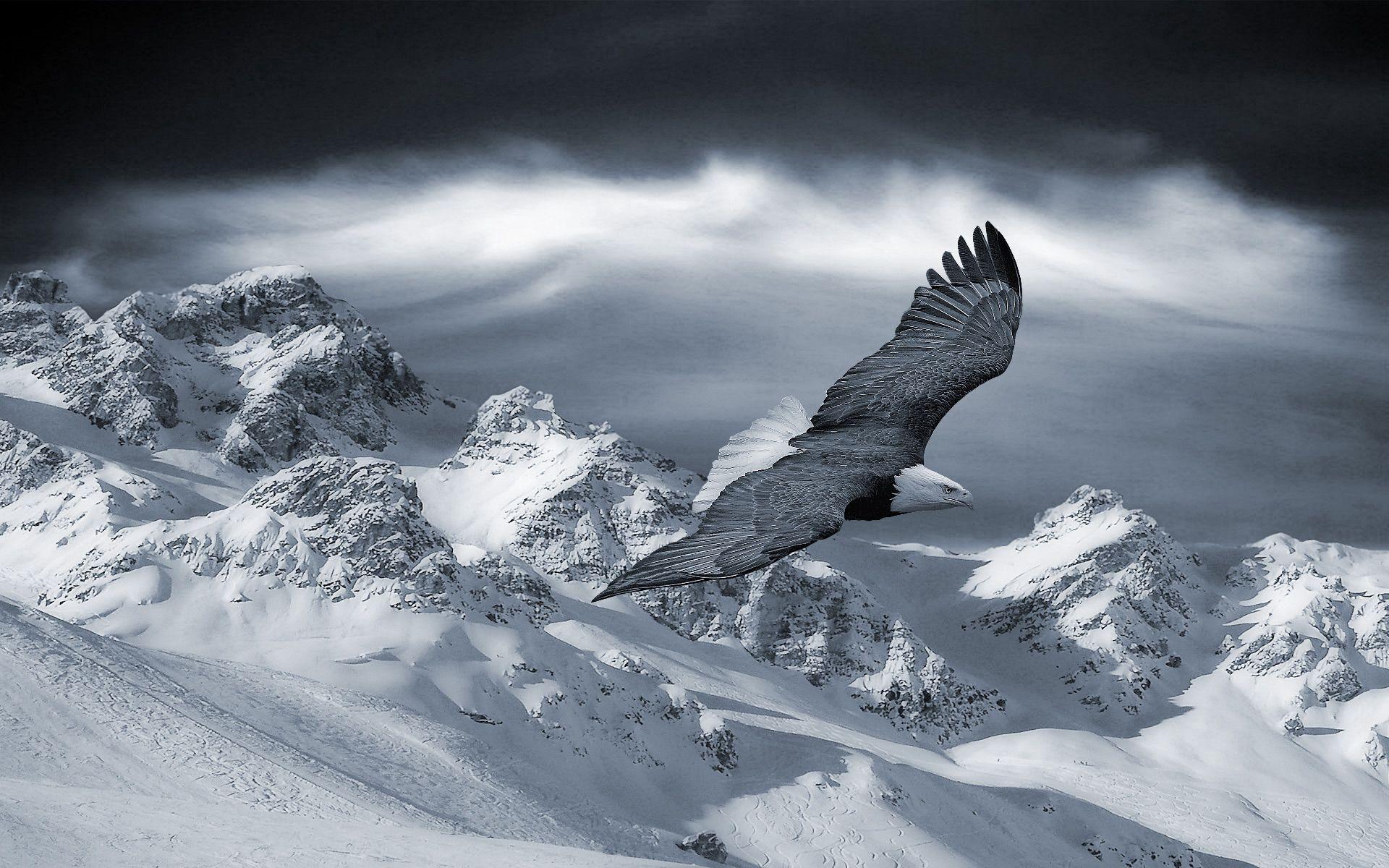 152459 descargar fondo de pantalla Animales, Águila, Cielo, Nieve, Sierras, Loma, Pájaro, Depredador, Montañas: protectores de pantalla e imágenes gratis