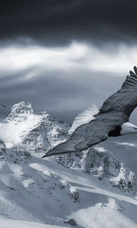 152459 download wallpaper Animals, Eagle, Sky, Snow, Hills, Hill, Bird, Predator, Mountains screensavers and pictures for free