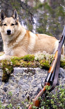 38887 baixar papel de parede Animais, Cães - protetores de tela e imagens gratuitamente