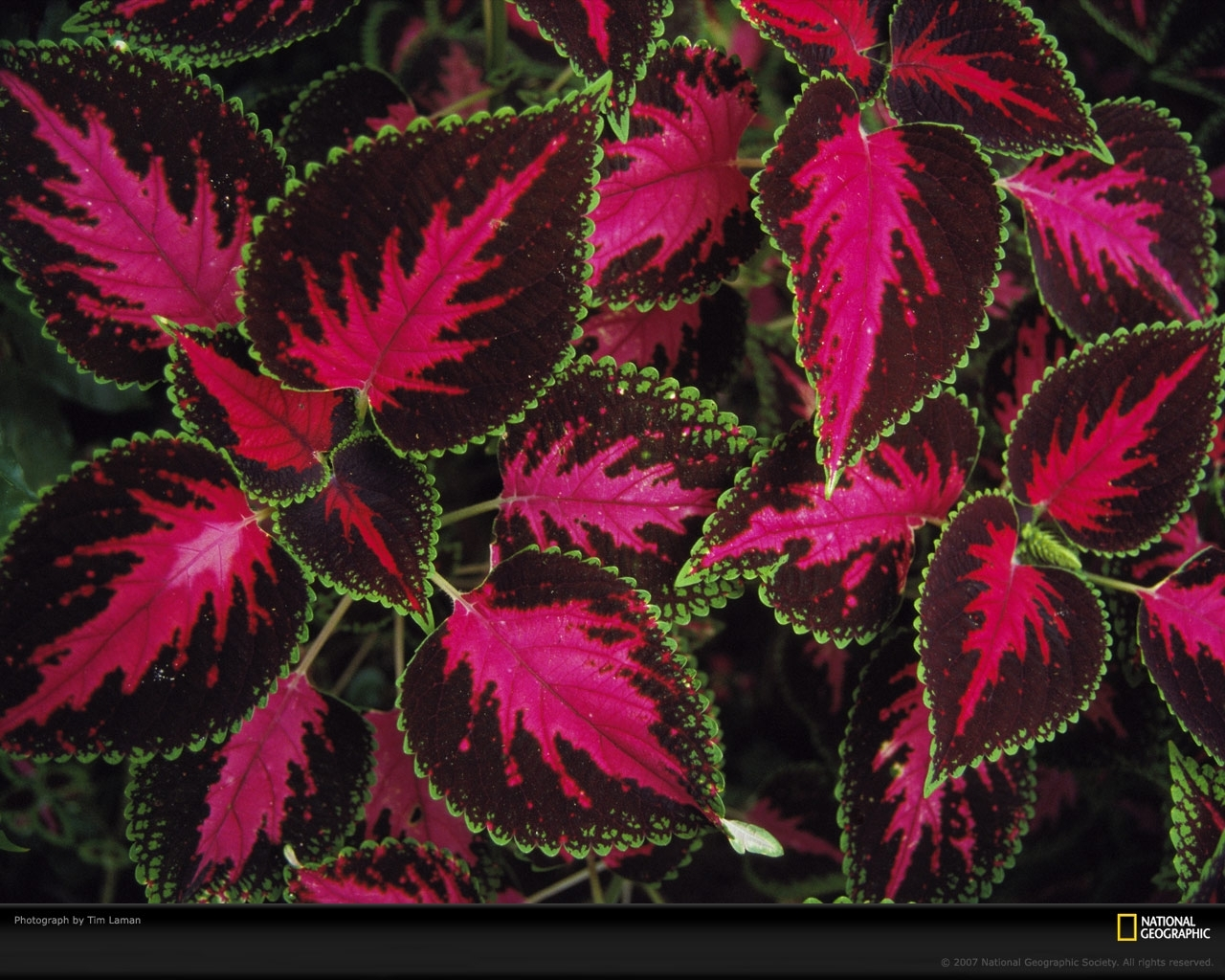 3538 скачать обои Растения, Фон, Листья - заставки и картинки бесплатно