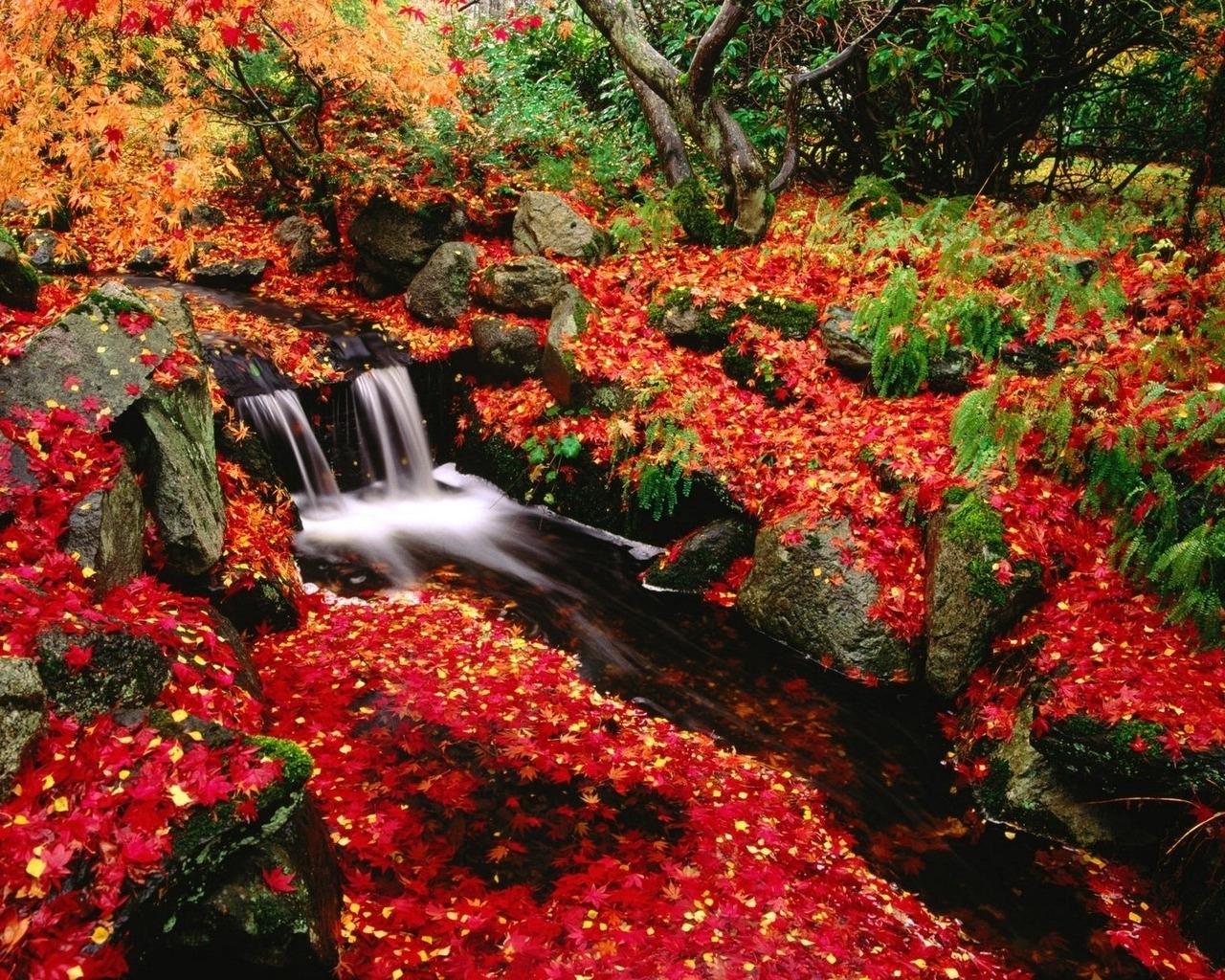 1635 скачать обои Растения, Пейзаж, Река, Осень, Листья - заставки и картинки бесплатно