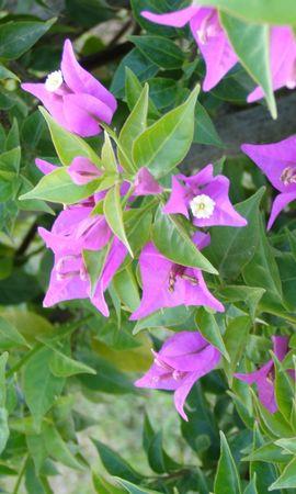 8116 скачать обои Растения, Цветы - заставки и картинки бесплатно