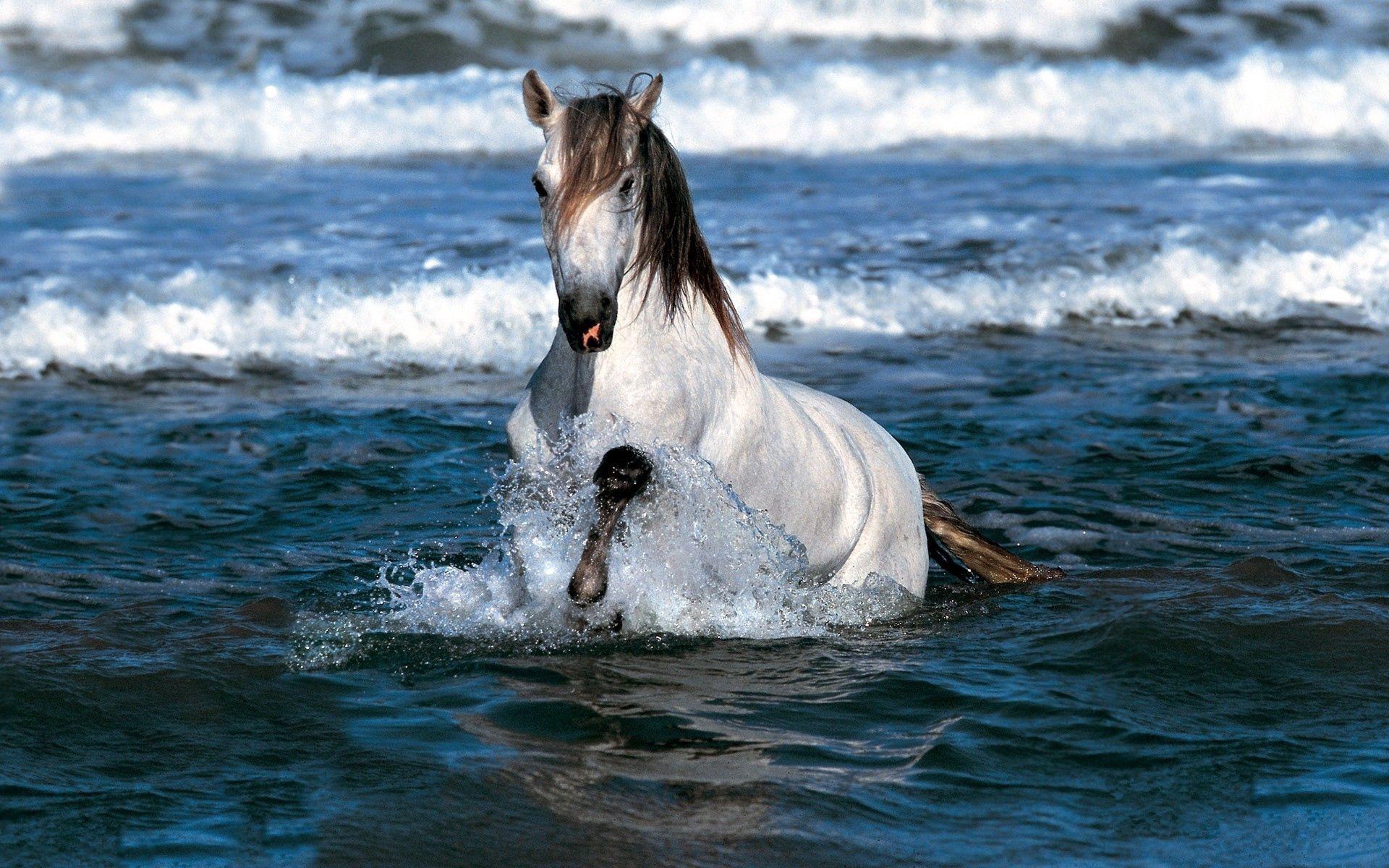 Популярные картинки Лошадь в HD качестве