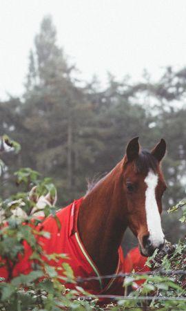 130380 baixar papel de parede Animais, Cavalo, Curral, Fantasia - protetores de tela e imagens gratuitamente