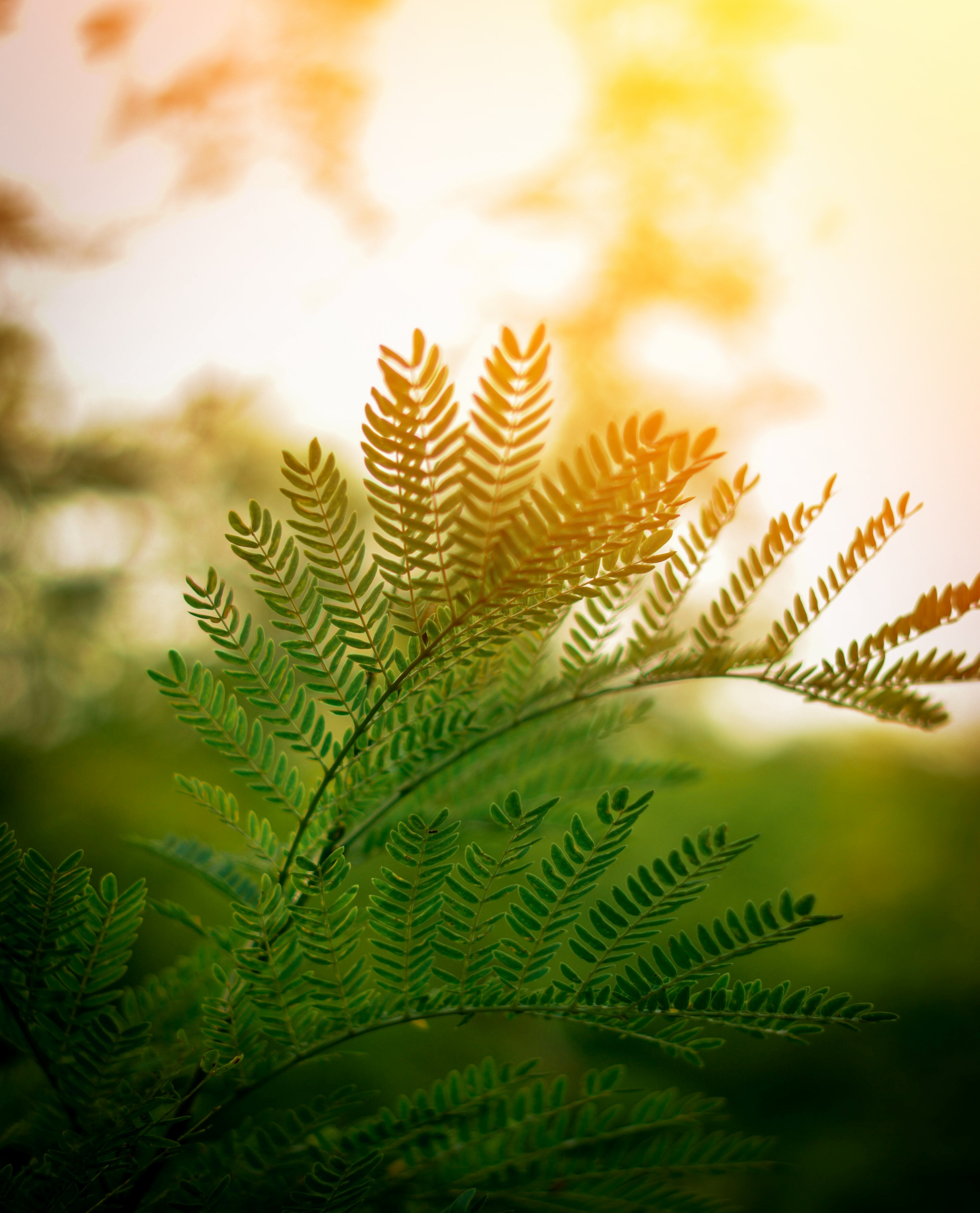 150049 download wallpaper Nature, Fern, Leaves, Branches, Plant, Sunlight screensavers and pictures for free