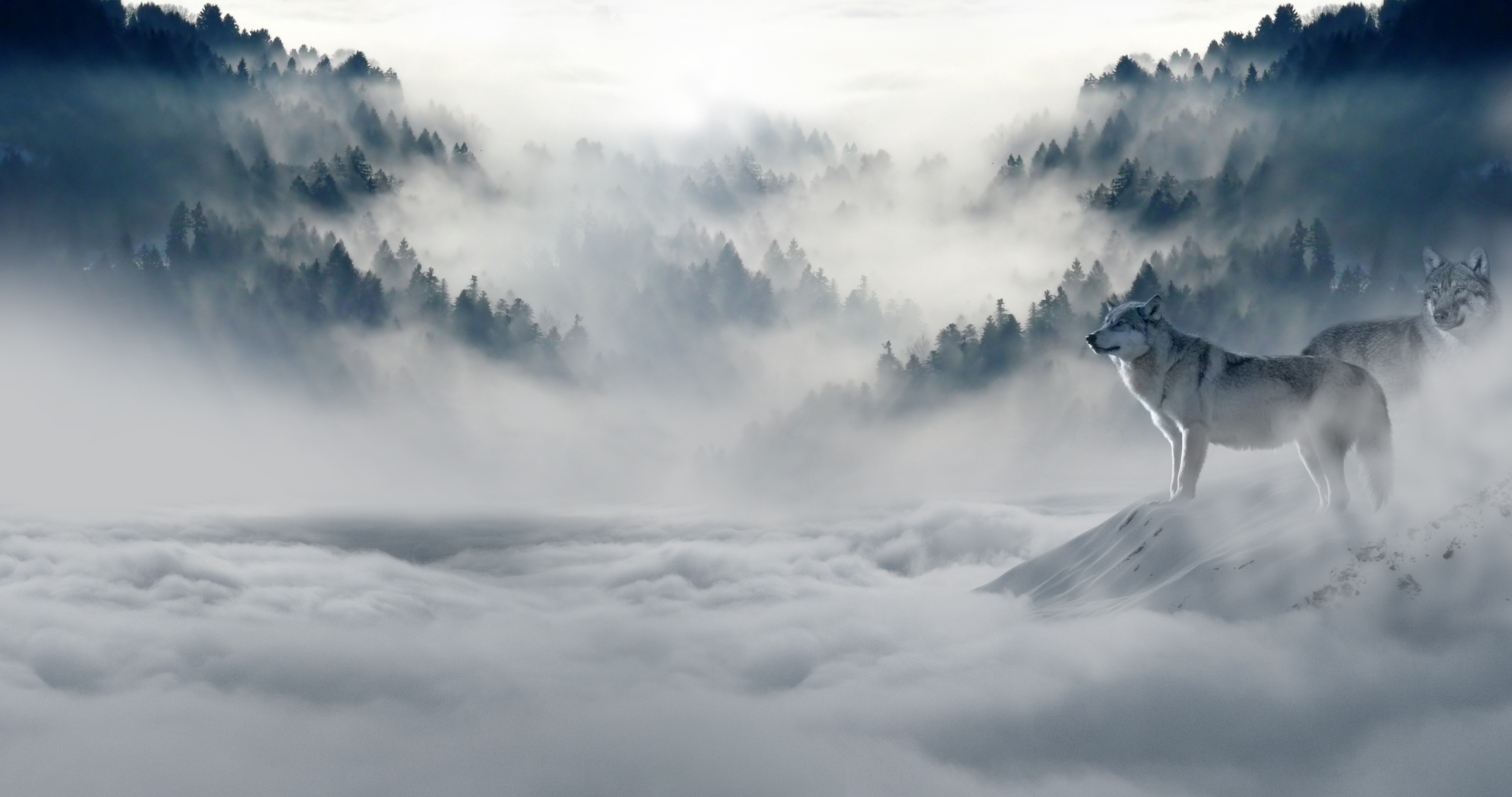 107515 download wallpaper Animals, Wolf, Wolfs, Predators, Fog, Snow, Mountains screensavers and pictures for free