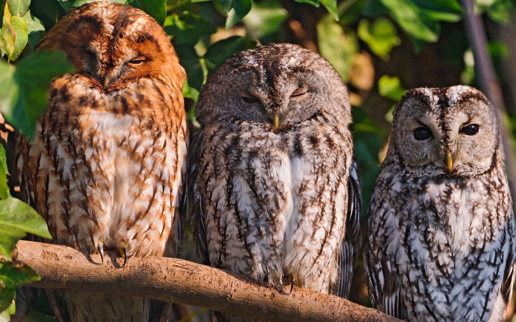 84746 Screensavers and Wallpapers Predators for phone. Download Animals, Birds, Owl, Predators, Sit pictures for free