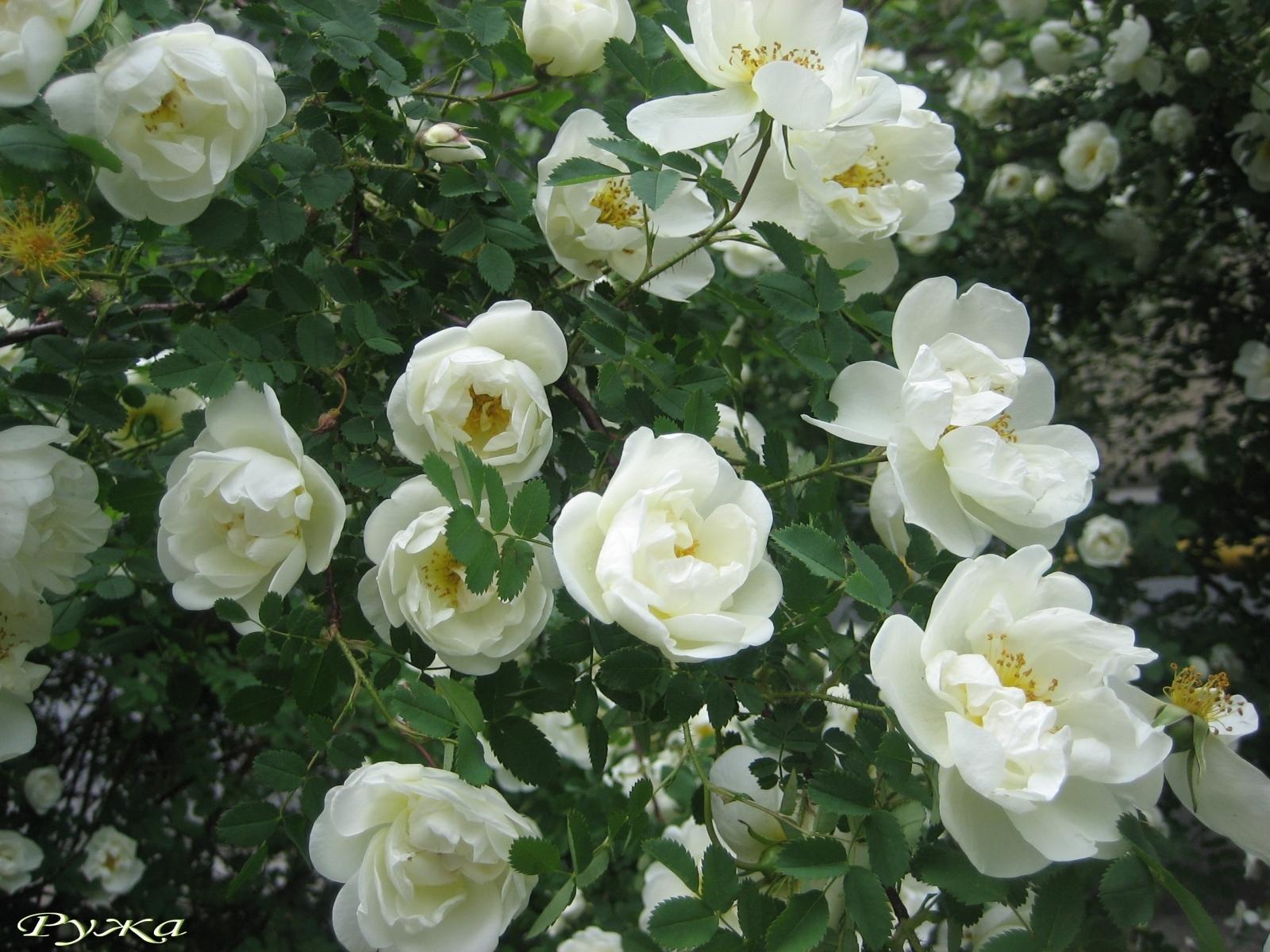 5106 скачать обои Растения, Цветы - заставки и картинки бесплатно