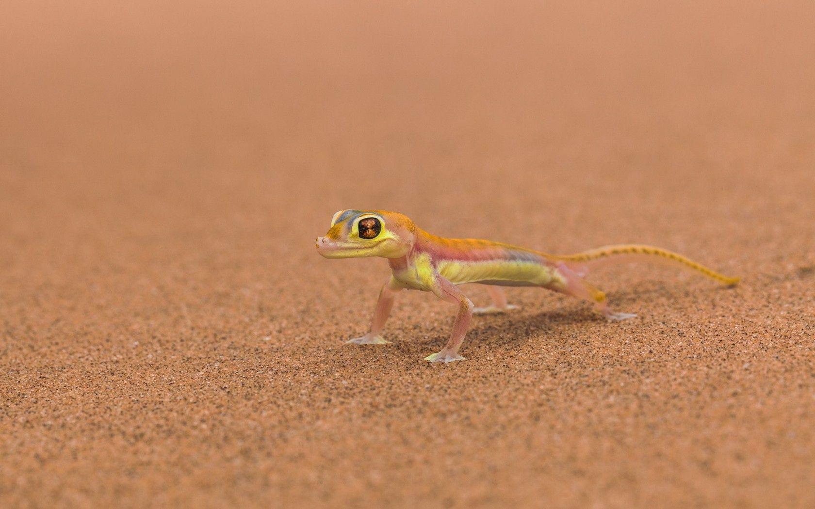 100109 Hintergrundbild herunterladen Tiere, Hintergrund, Eidechse, Mars - Bildschirmschoner und Bilder kostenlos