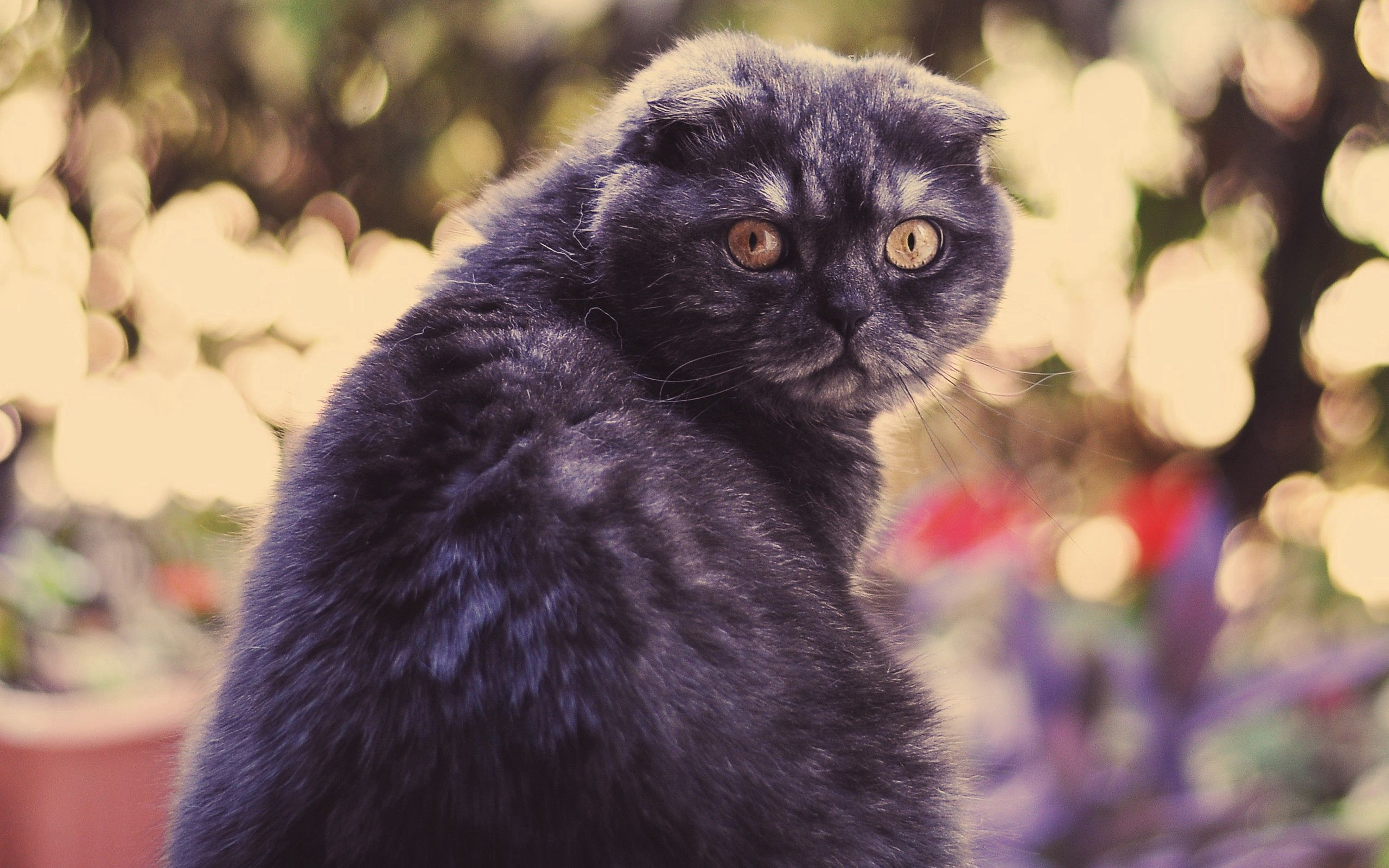 100605 download wallpaper Animals, Cat, Look Around, Look Back, Spotted, Spotty screensavers and pictures for free