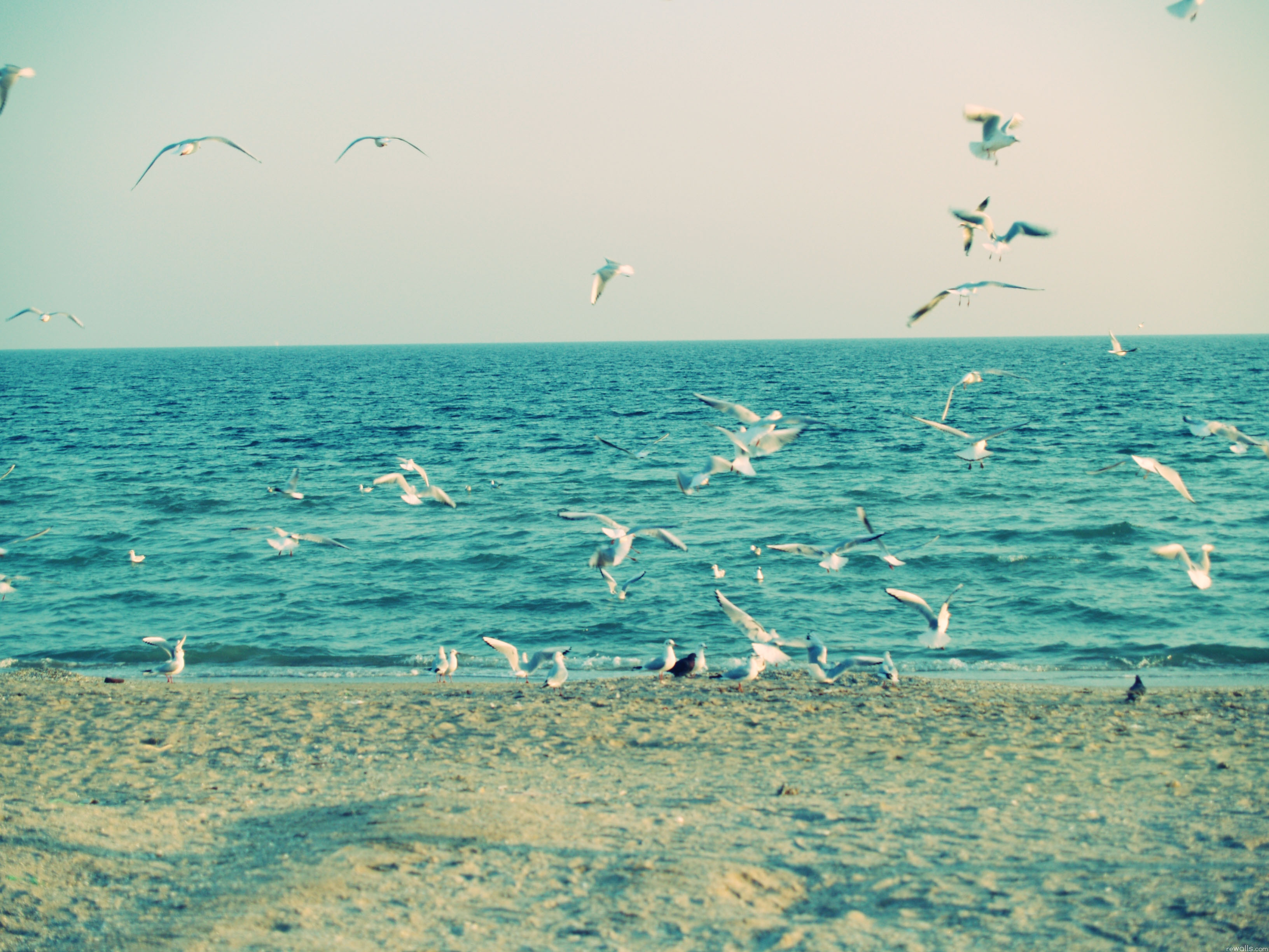 92268 download wallpaper Animals, Sea, Shore, Bank, Sand, Waves, Seagulls screensavers and pictures for free