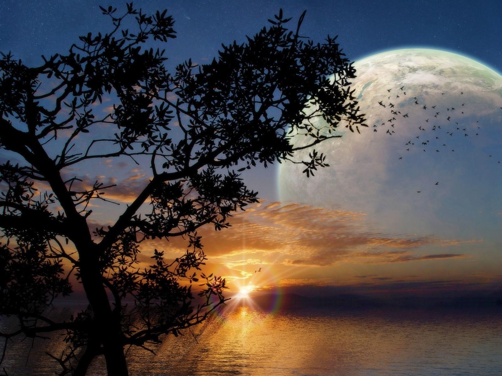 2591 скачать обои Пейзаж, Деревья, Небо, Солнце - заставки и картинки бесплатно