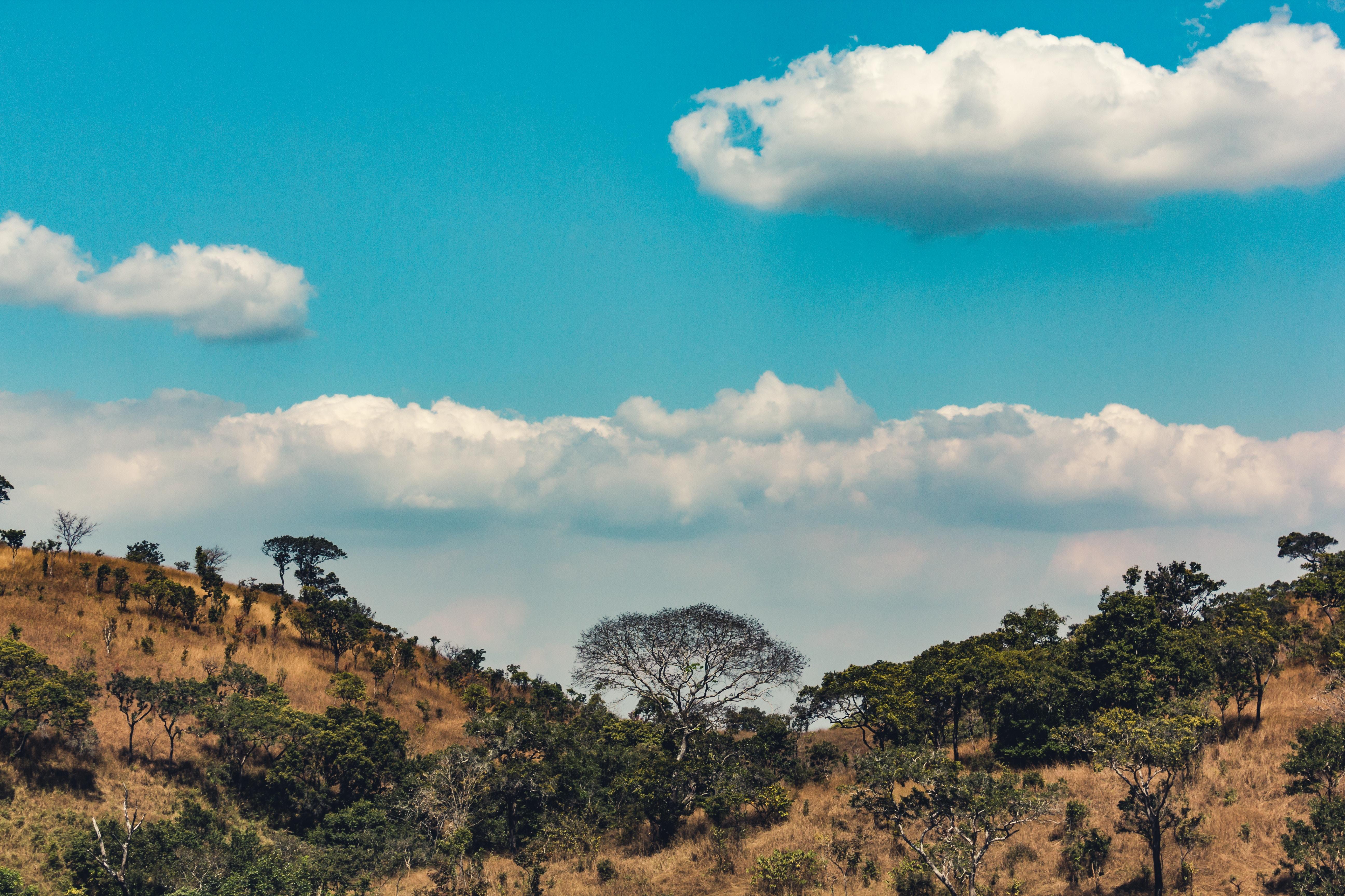 55029 скачать обои Природа, Африка, Возвышенности, Деревья, Облака - заставки и картинки бесплатно