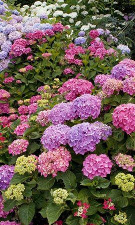 1820 descargar fondo de pantalla Plantas, Flores: protectores de pantalla e imágenes gratis