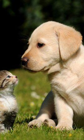81101 Salvapantallas y fondos de pantalla Hierba en tu teléfono. Descarga imágenes de Animales, Perro, Gato, Gatito, Cachorro, Hierba gratis