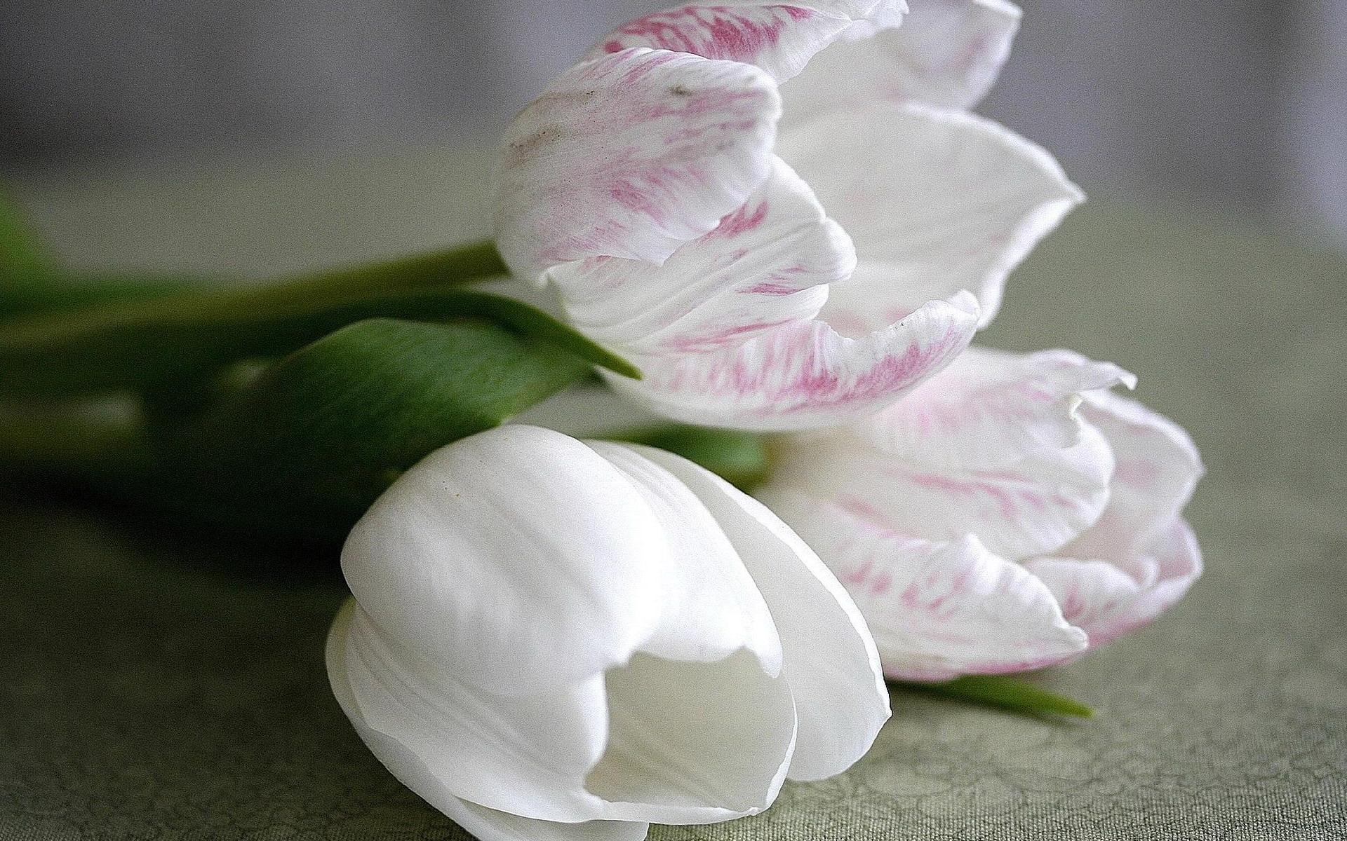 41468 завантажити шпалери Рослини, Пейзаж, Квіти, Тюльпани - заставки і картинки безкоштовно