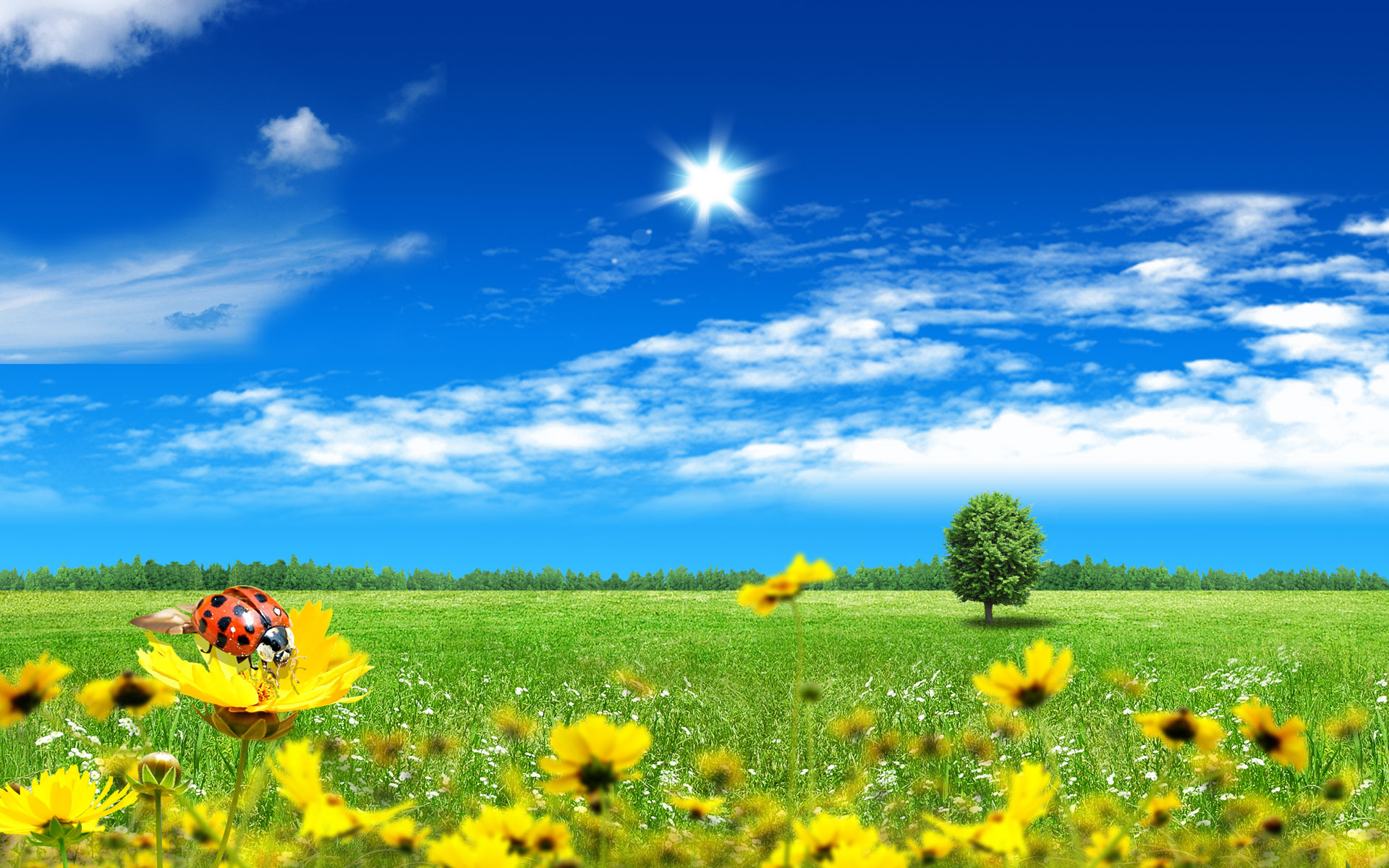 10438 download wallpaper Landscape, Insects, Ladybugs screensavers and pictures for free