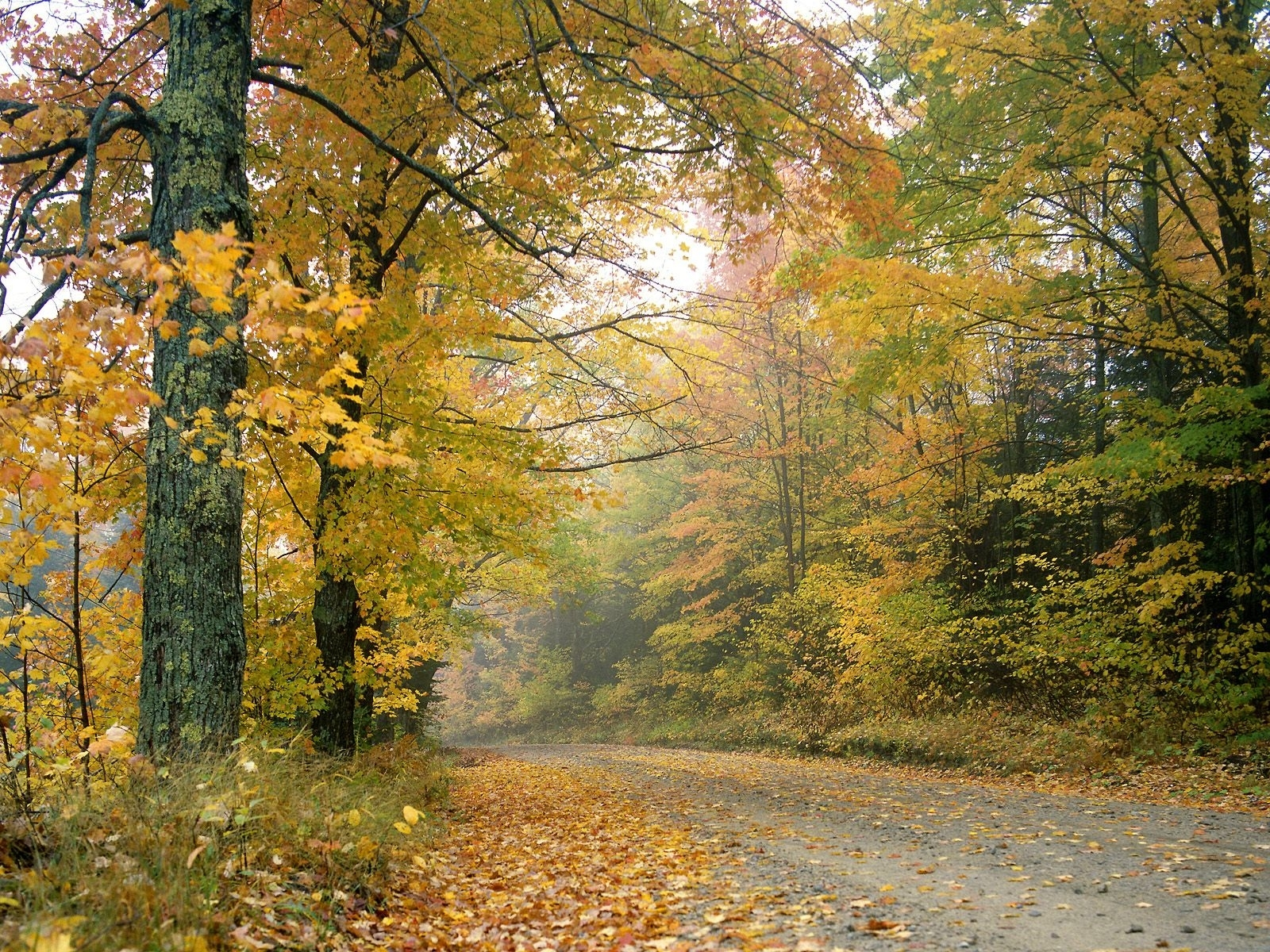 7522 скачать обои Пейзаж, Деревья, Дороги, Осень - заставки и картинки бесплатно