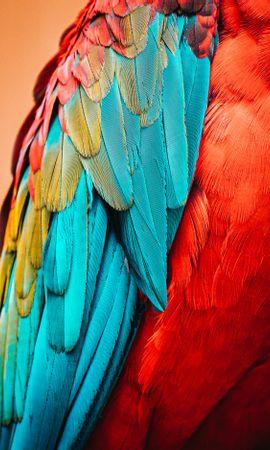 124134 baixar papel de parede Animais, Papagaios, Pássaro, Macro, Pena - protetores de tela e imagens gratuitamente