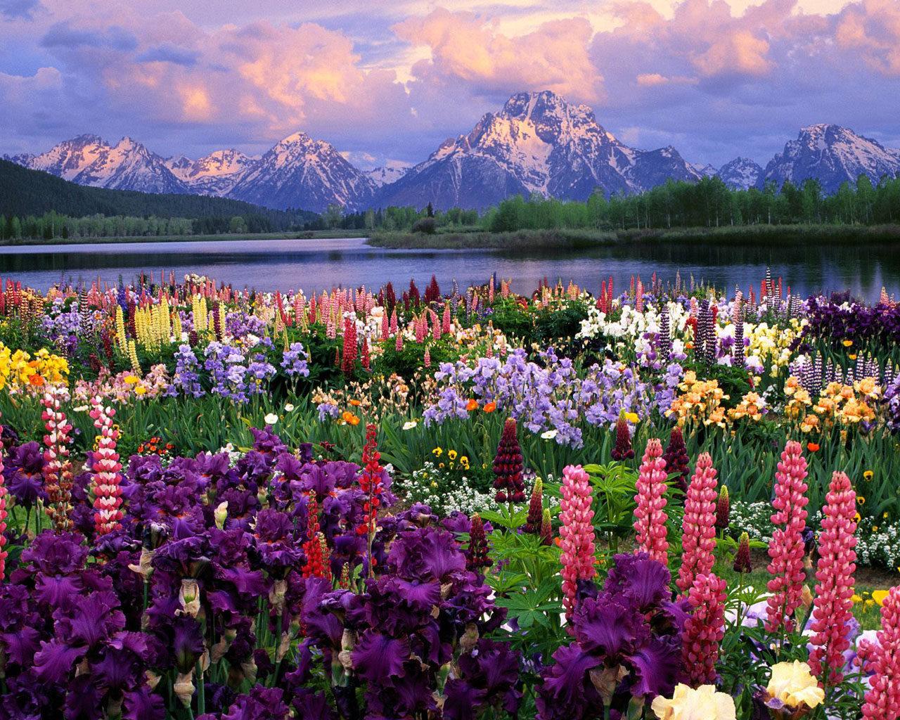 14470 télécharger le fond d'écran Plantes, Paysage, Fleurs, Montagnes - économiseurs d'écran et images gratuitement