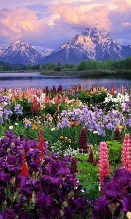 14470 descargar fondo de pantalla Plantas, Paisaje, Flores, Montañas: protectores de pantalla e imágenes gratis