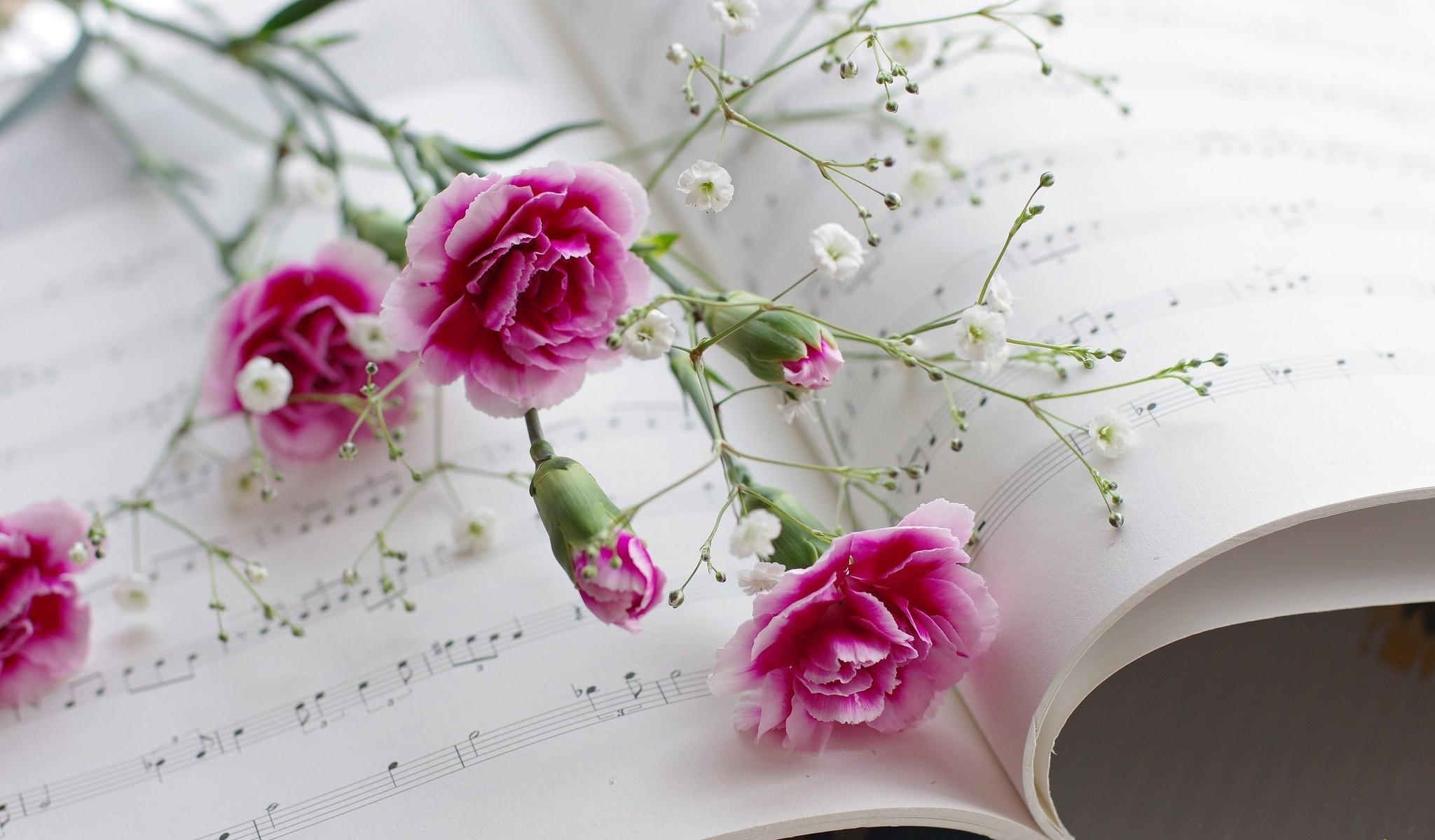 120971 Hintergrundbild herunterladen Musik, Blumen, Nelken, Schleierkraut, Gipsophile, Anmerkungen - Bildschirmschoner und Bilder kostenlos