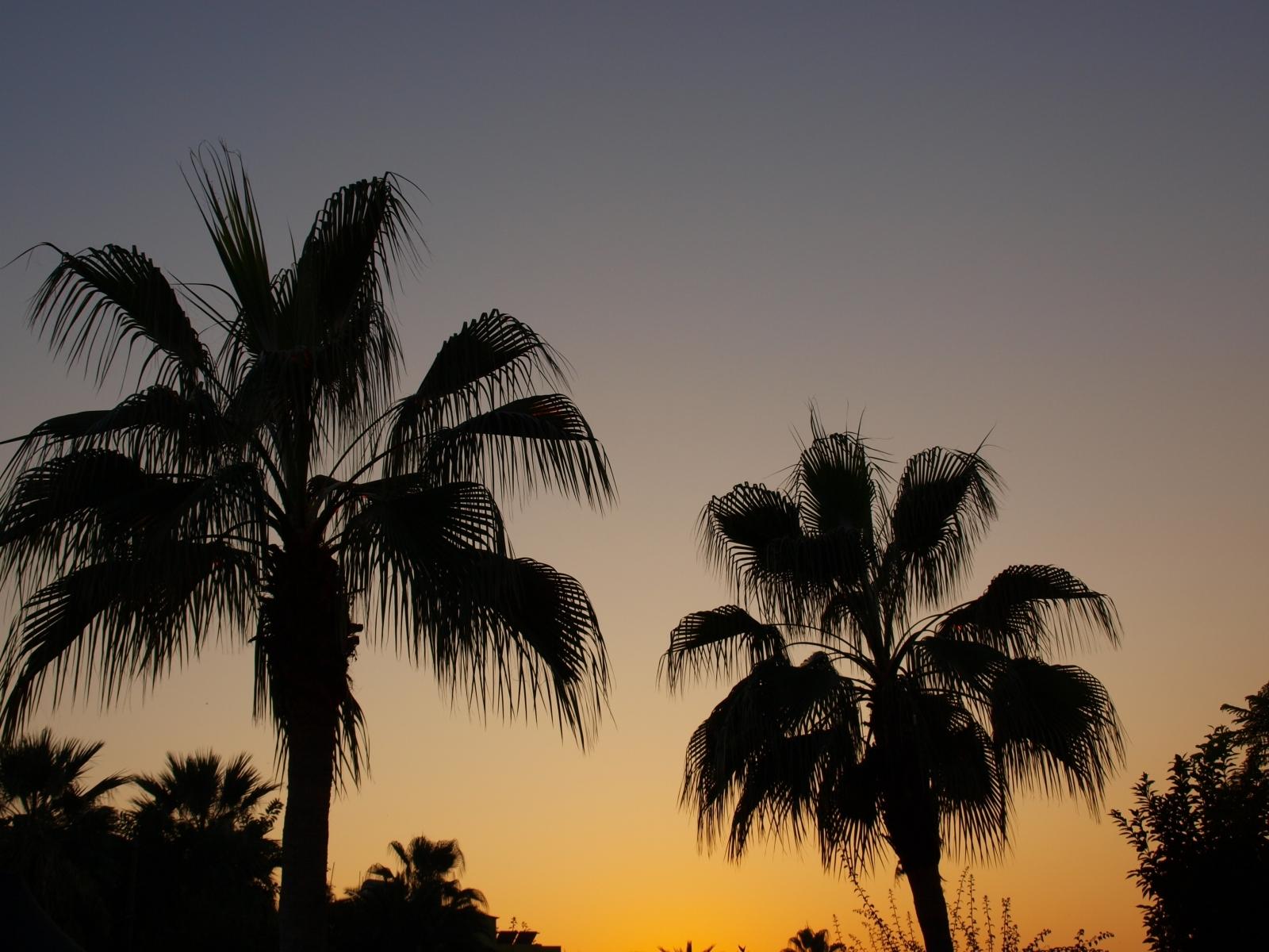6598 скачать обои Пейзаж, Деревья, Закат, Пальмы - заставки и картинки бесплатно